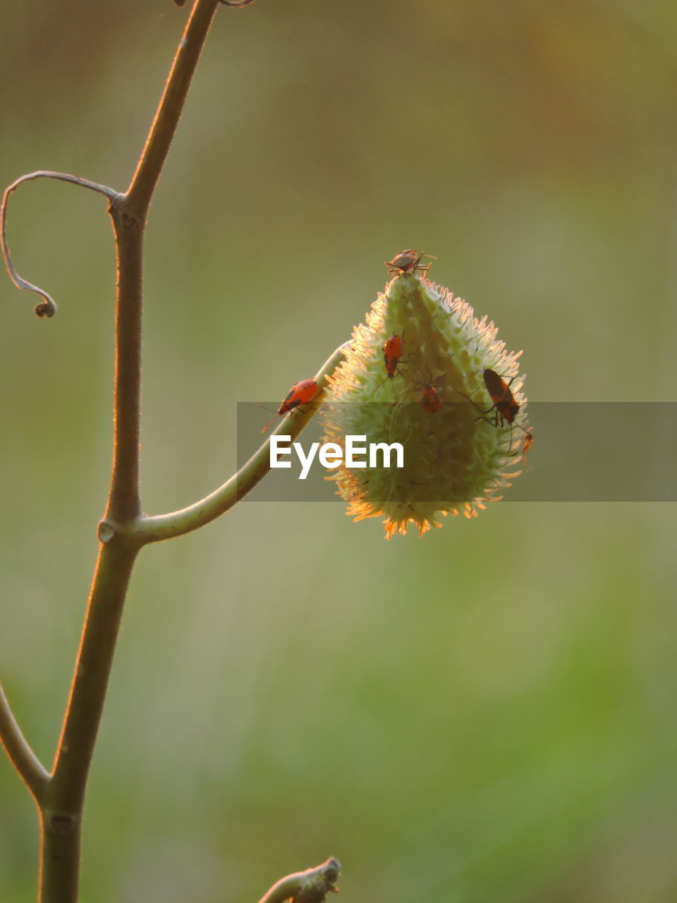 Close-Up Of Flower Buds On Twig