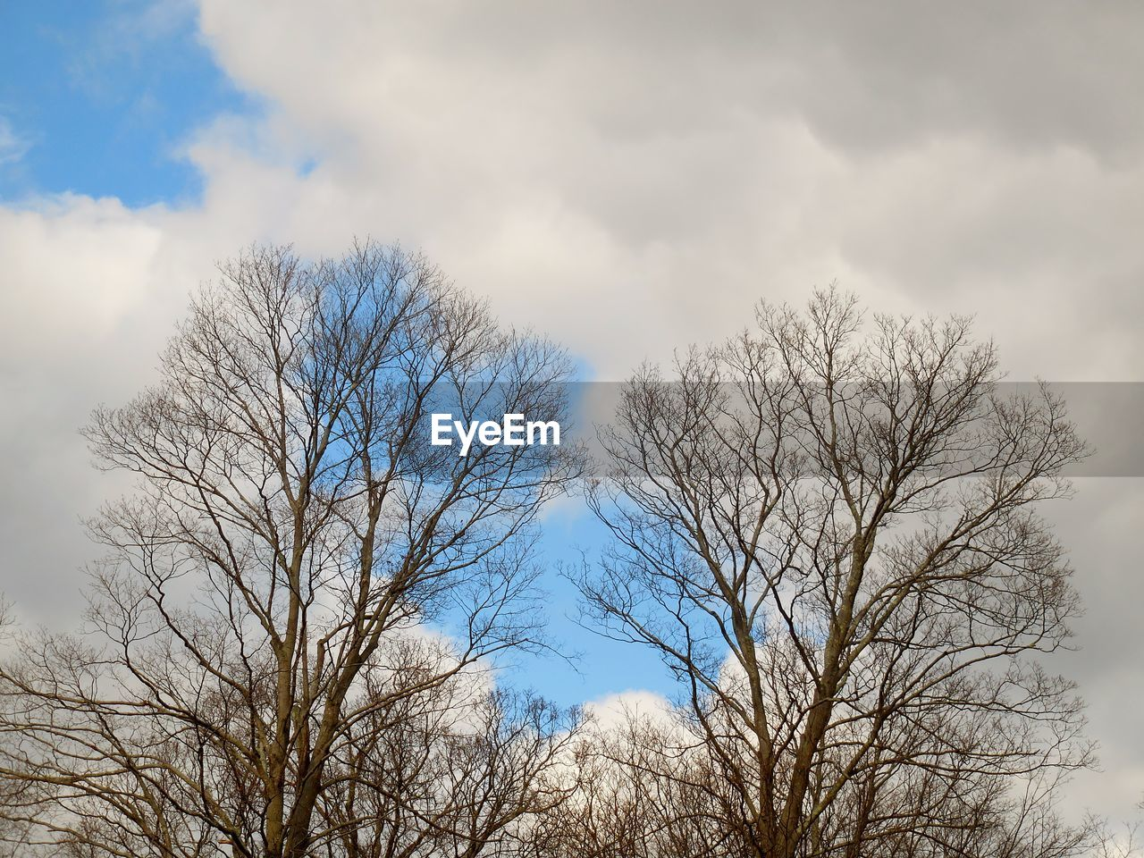 bare tree, sky, low angle view, cloud - sky, nature, tree, beauty in nature, tranquility, day, outdoors, branch, no people, scenics