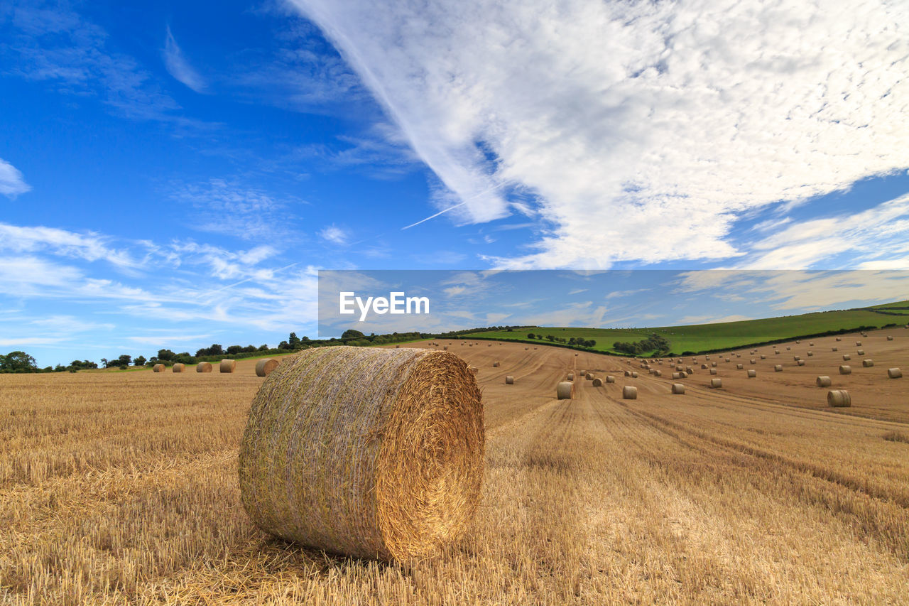bale, agriculture, field, rural scene, sky, hay bale, harvesting, tranquility, landscape, farm, hay, tranquil scene, cloud - sky, scenics, beauty in nature, nature, no people, blue, day, outdoors