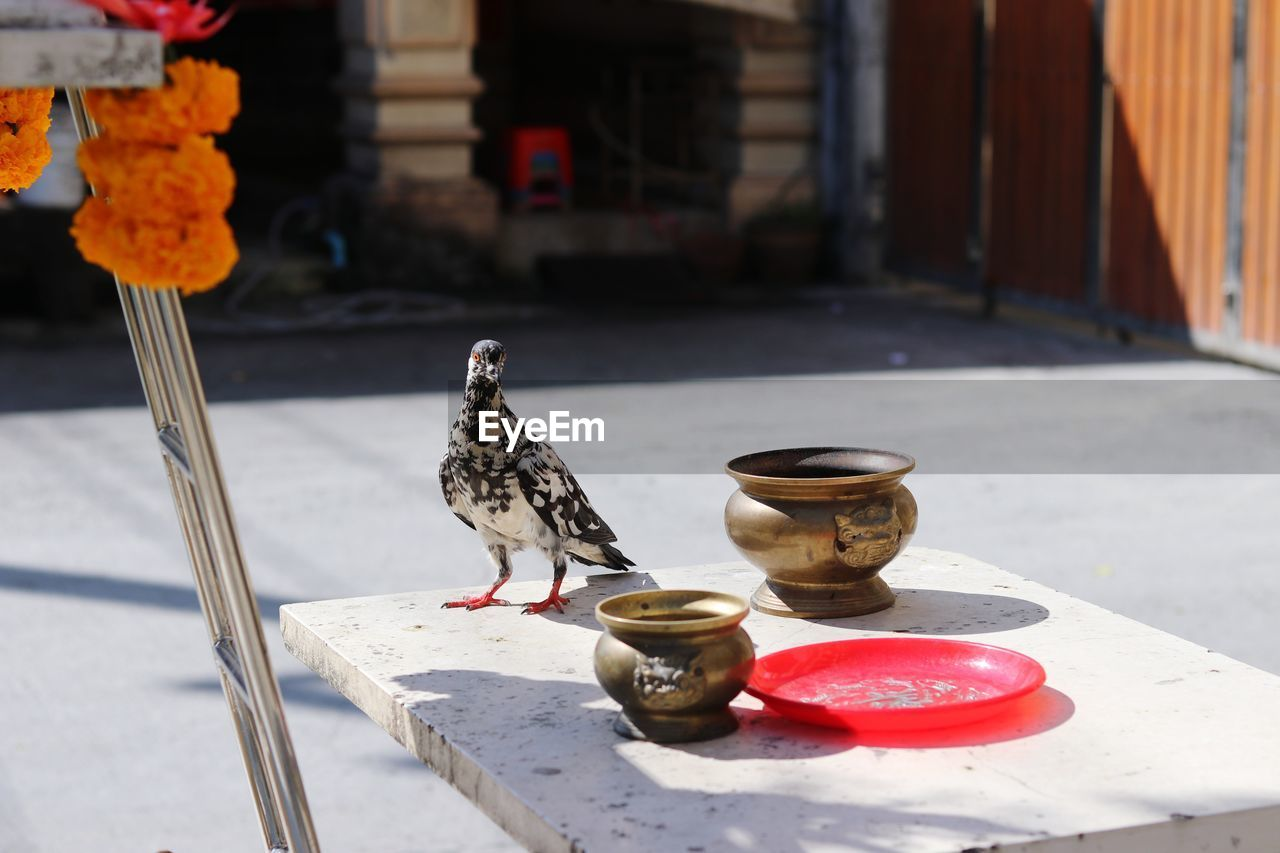 BIRDS PERCHING ON TABLE