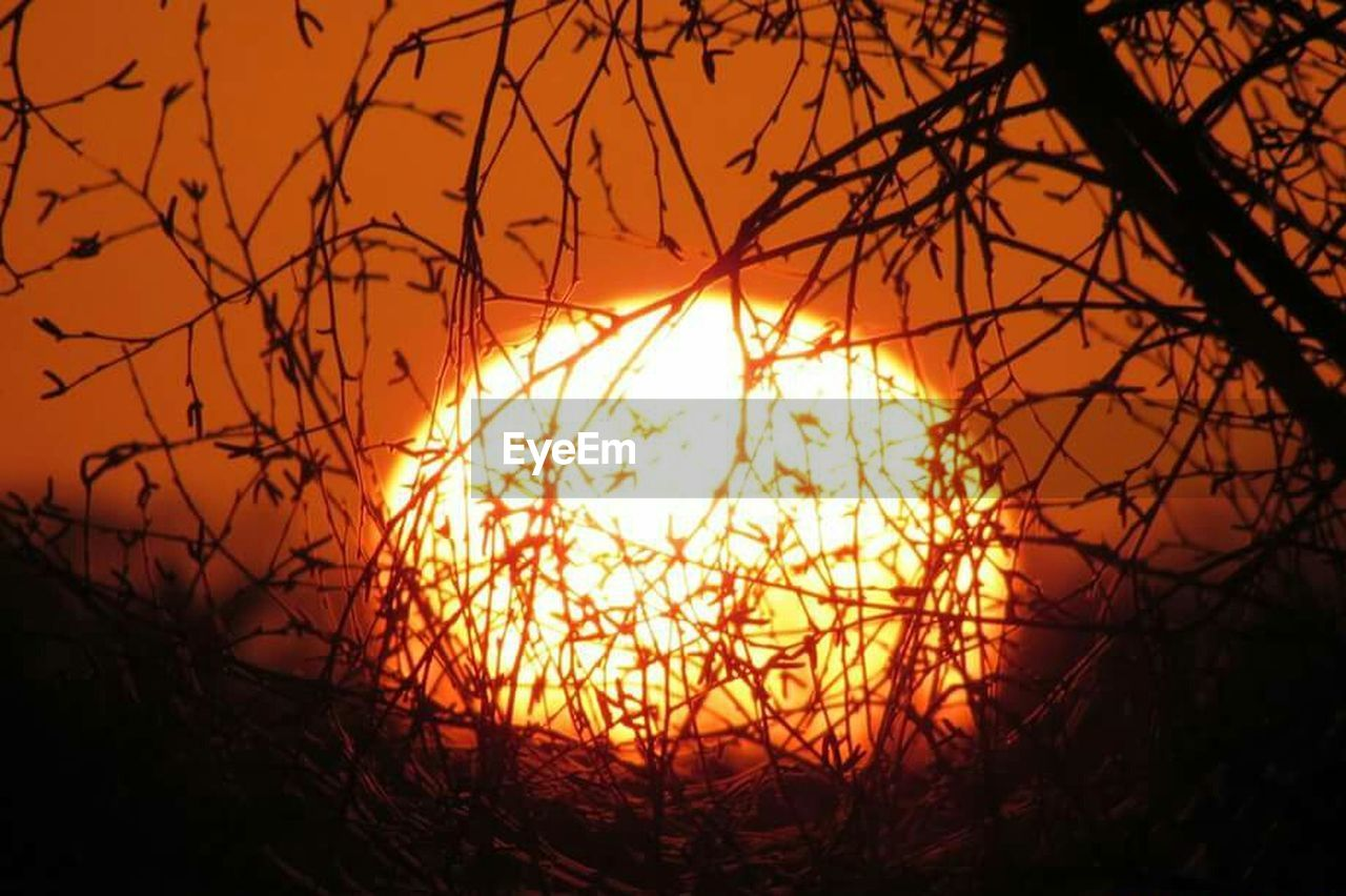 sunset, sun, orange color, nature, beauty in nature, no people, outdoors, silhouette, tranquility, tranquil scene, sunlight, scenics, sky, close-up, tree, day