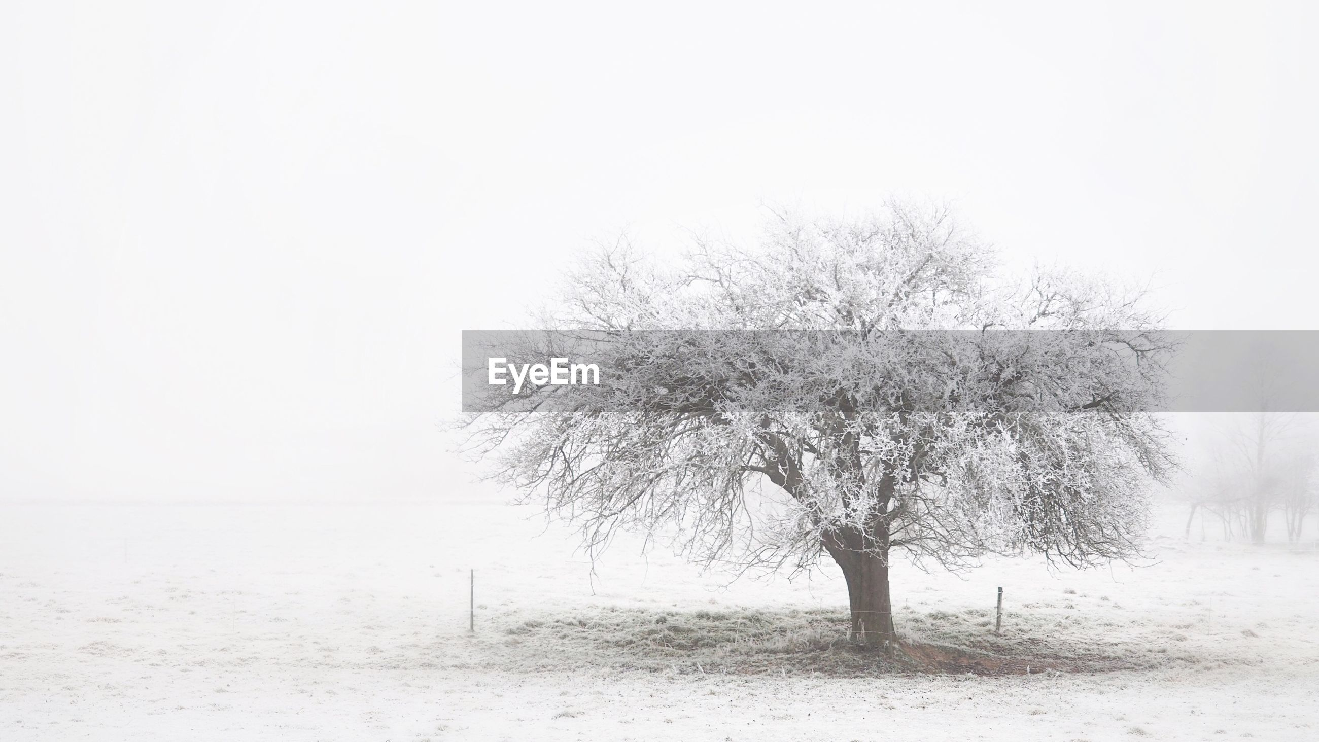 Lone tree on snow covered landscape