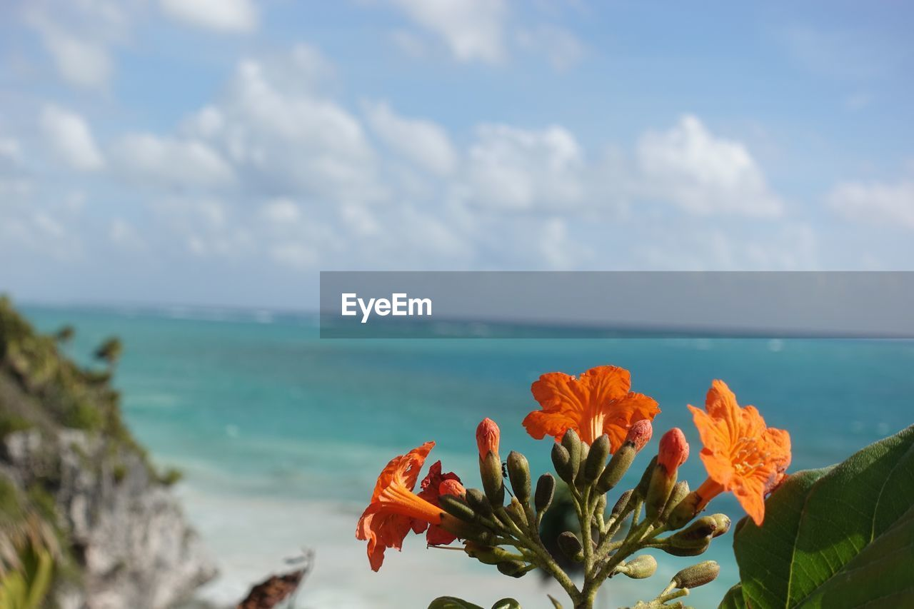 beauty in nature, water, flower, flowering plant, sky, sea, plant, freshness, nature, horizon, cloud - sky, vulnerability, horizon over water, fragility, growth, petal, close-up, focus on foreground, day, flower head, no people, outdoors