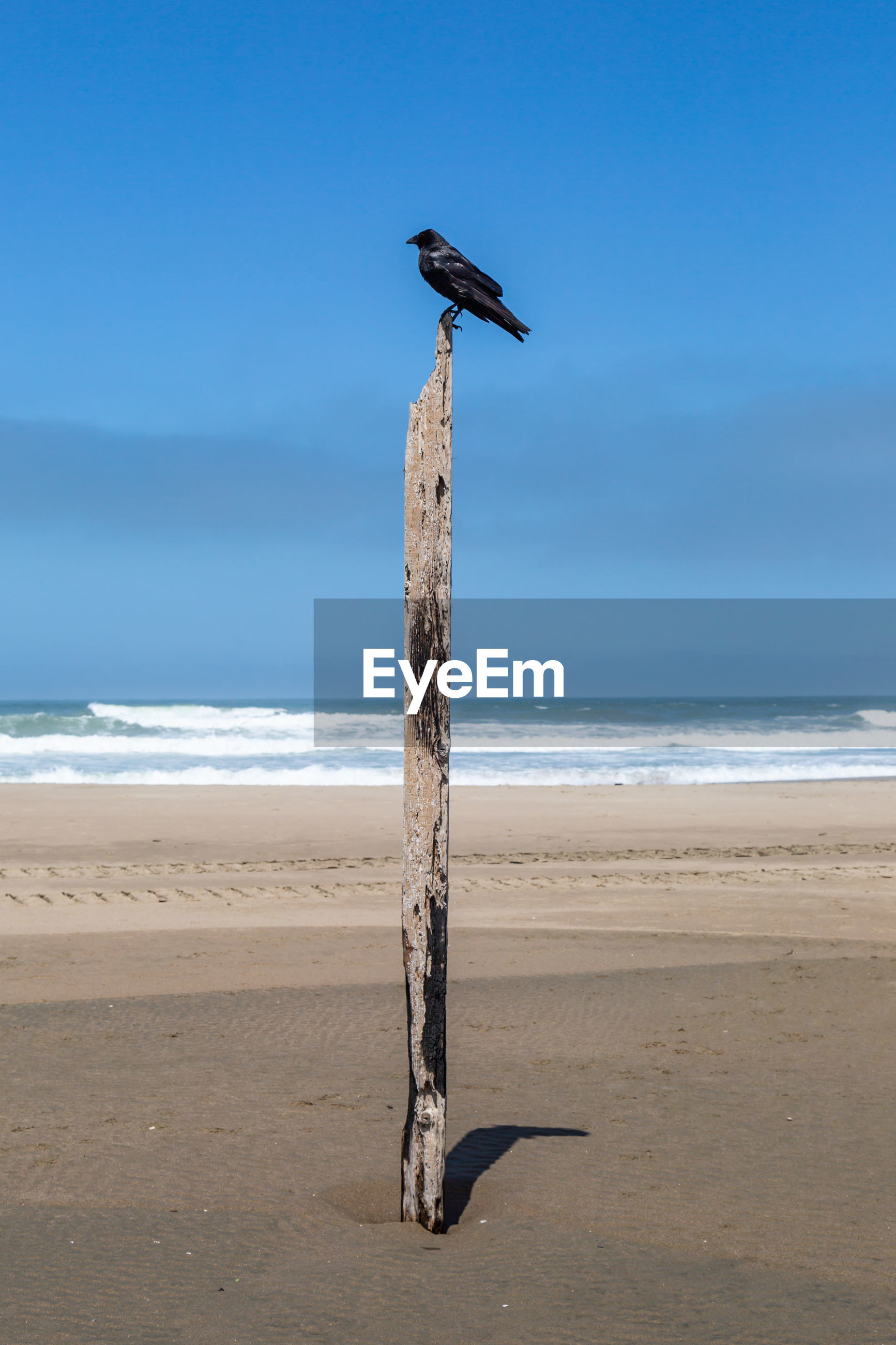 Bird perching on wooden post against sea