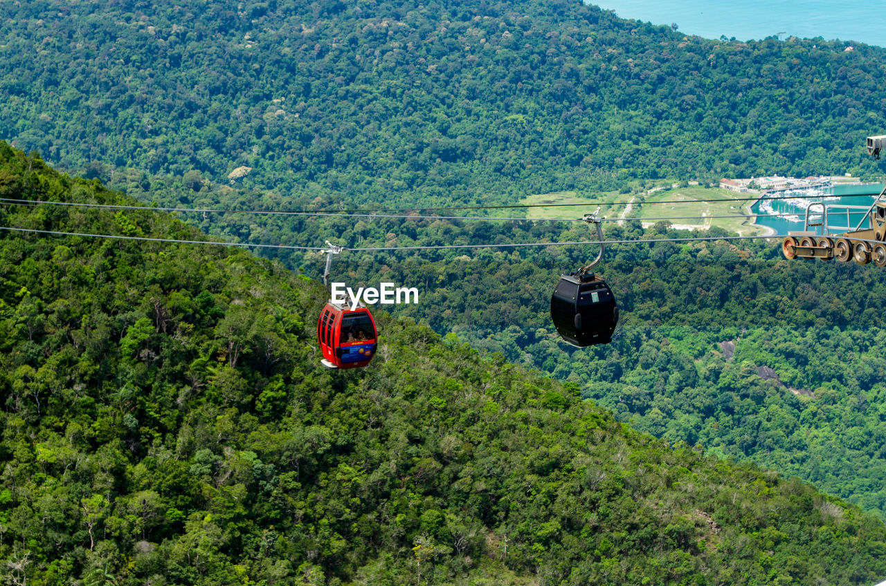 tree, plant, mode of transportation, transportation, landscape, green color, day, nature, beauty in nature, scenics - nature, land, mountain, overhead cable car, cable car, growth, high angle view, environment, foliage, no people, lush foliage, outdoors
