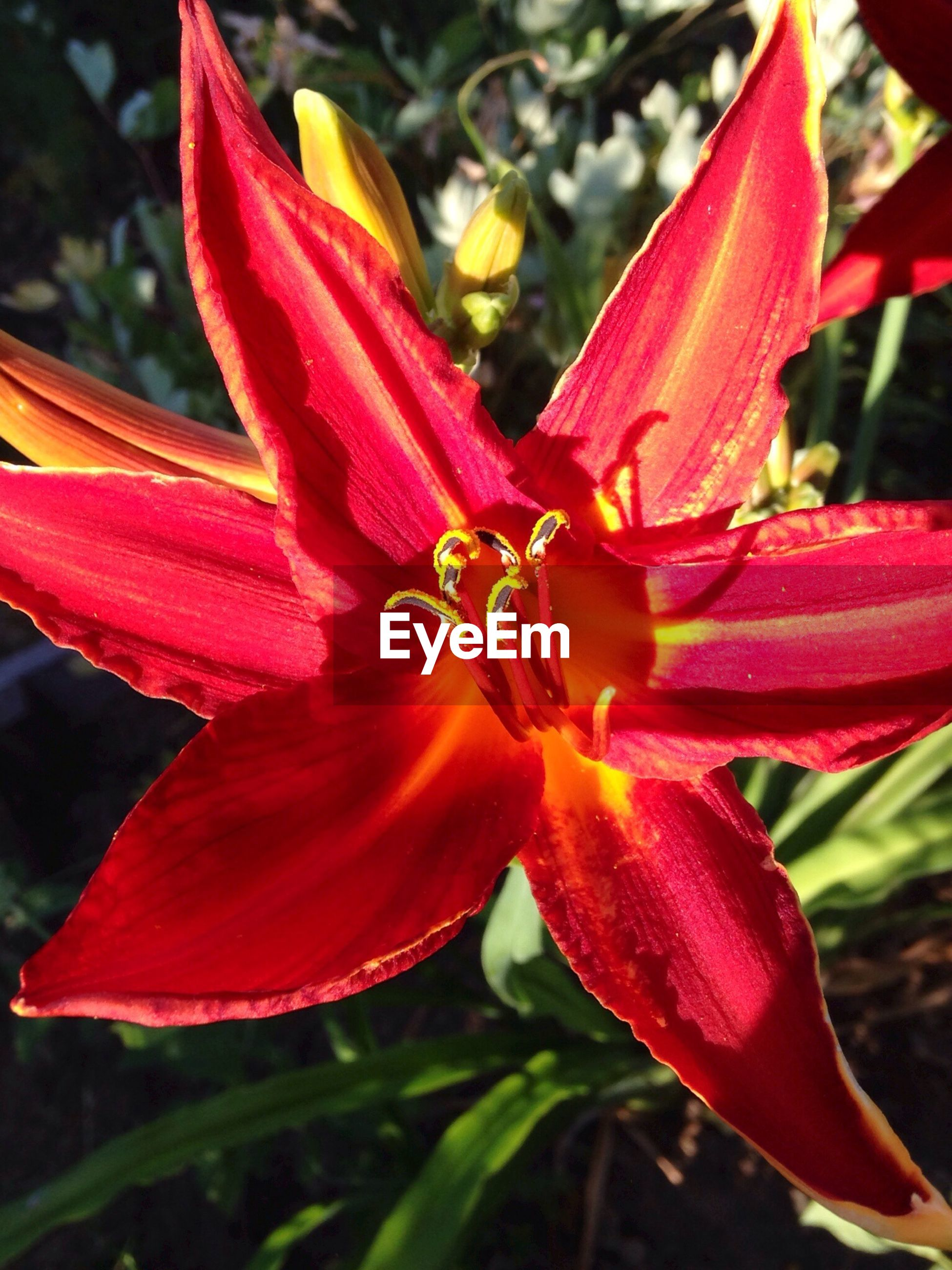 flower, petal, flower head, freshness, fragility, growth, close-up, beauty in nature, blooming, pollen, red, nature, plant, focus on foreground, stamen, single flower, in bloom, park - man made space, day, selective focus