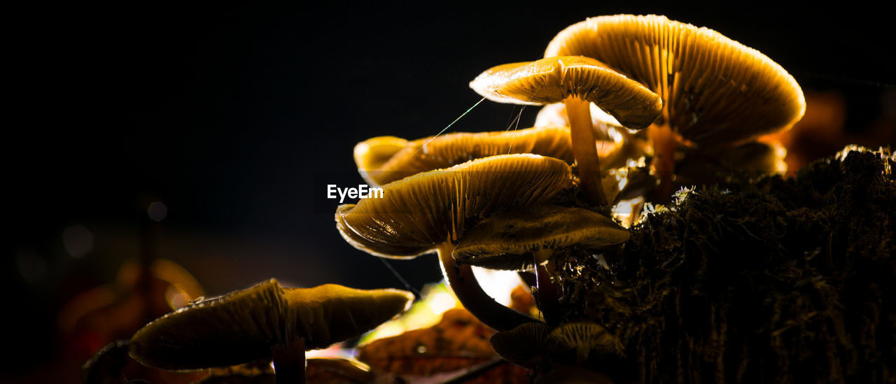 Mushrooms Growing At Forest During Night