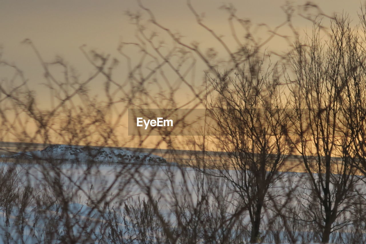 bare tree, tree, plant, sunset, sky, tranquility, no people, beauty in nature, water, scenics - nature, nature, tranquil scene, branch, lake, winter, cold temperature, outdoors, silhouette