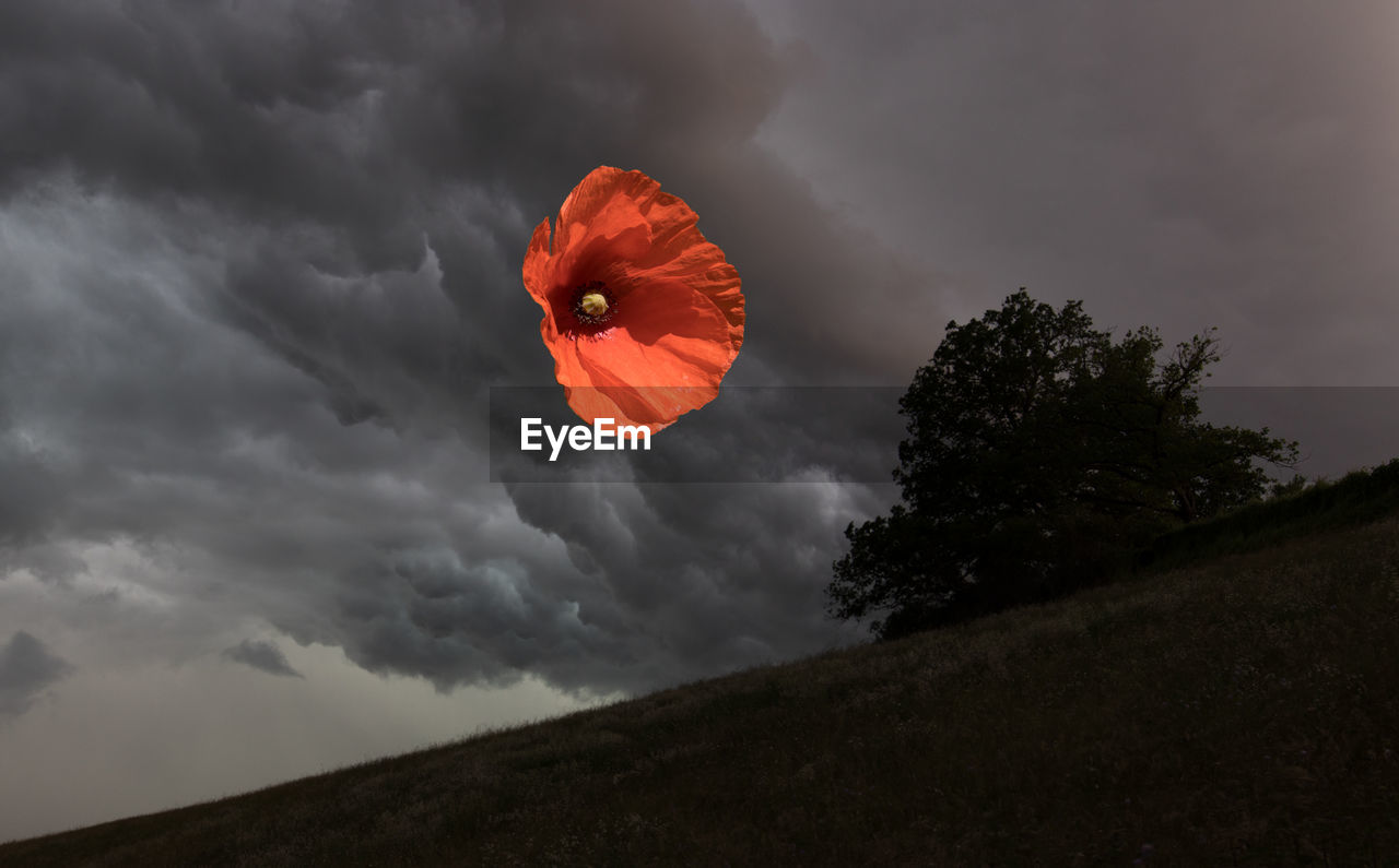 cloud - sky, sky, beauty in nature, plant, nature, red, no people, overcast, orange color, land, scenics - nature, storm, field, flowering plant, flower, outdoors, poppy, storm cloud, growth, flower head, ominous