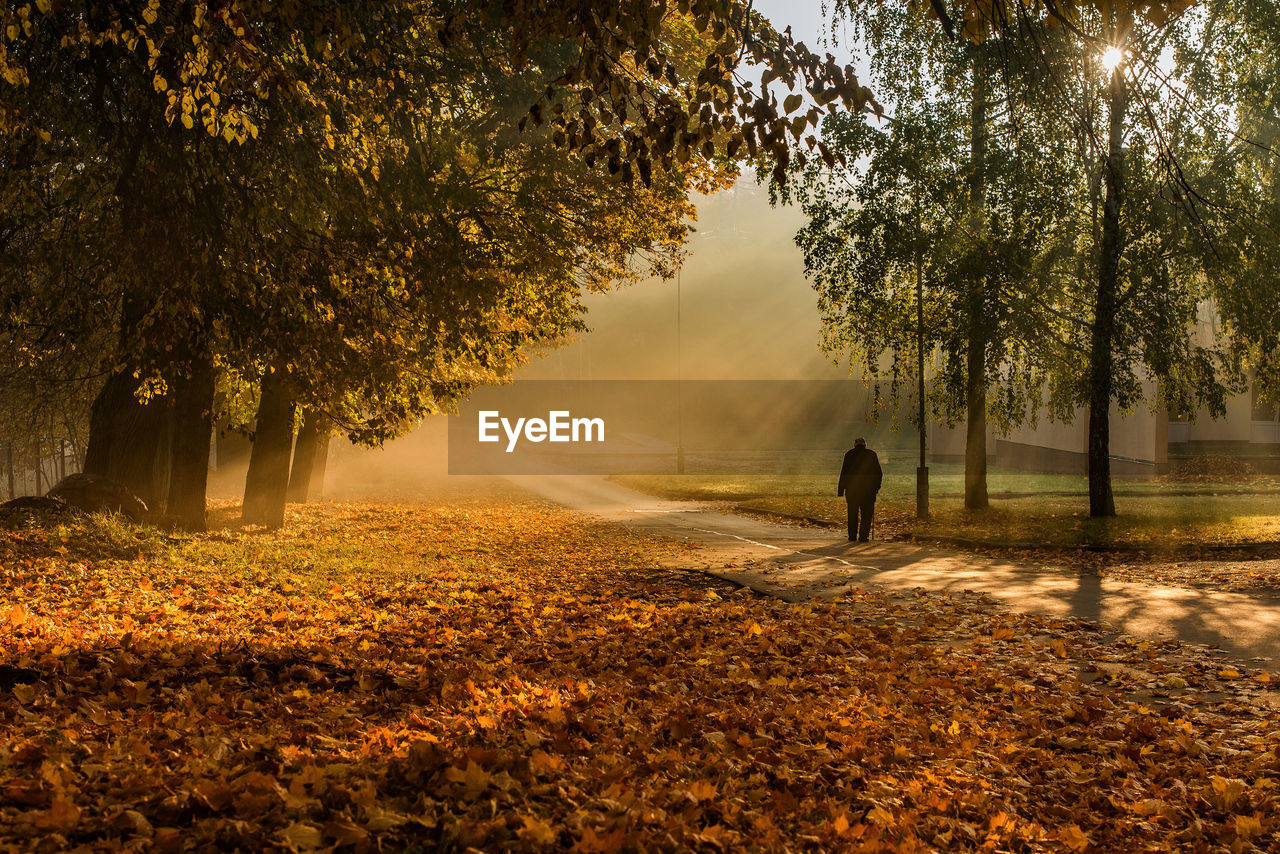 tree, plant, real people, nature, one person, beauty in nature, growth, autumn, lifestyles, leaf, tranquility, leisure activity, plant part, men, change, land, rear view, tranquil scene, outdoors, autumn collection