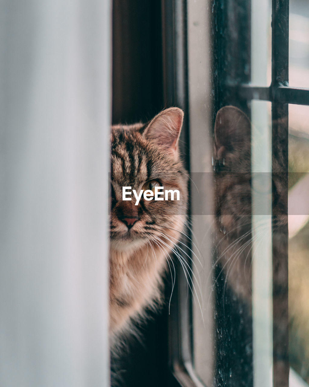 Close-up portrait of cat peeking through window