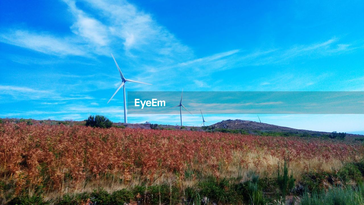 environment, renewable energy, environmental conservation, fuel and power generation, alternative energy, wind turbine, turbine, wind power, landscape, grass, sky, nature, cloud - sky, technology, field, land, no people, blue, rural scene, plant, outdoors, power supply, sustainable resources, power in nature