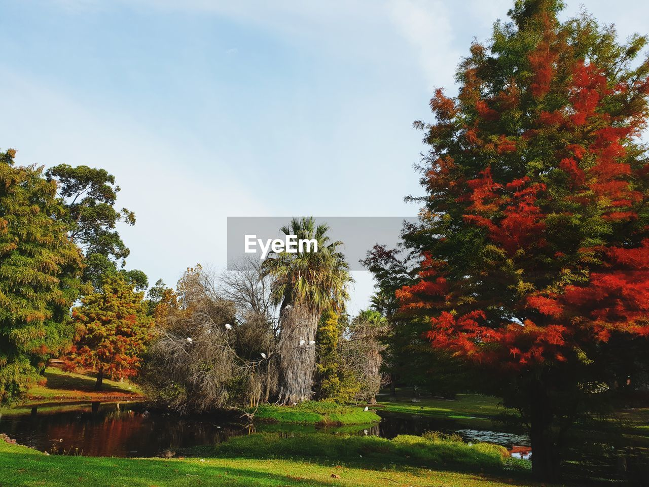 tree, plant, autumn, sky, beauty in nature, growth, tranquility, change, nature, no people, tranquil scene, day, water, scenics - nature, green color, outdoors, park, idyllic, cloud - sky, fall