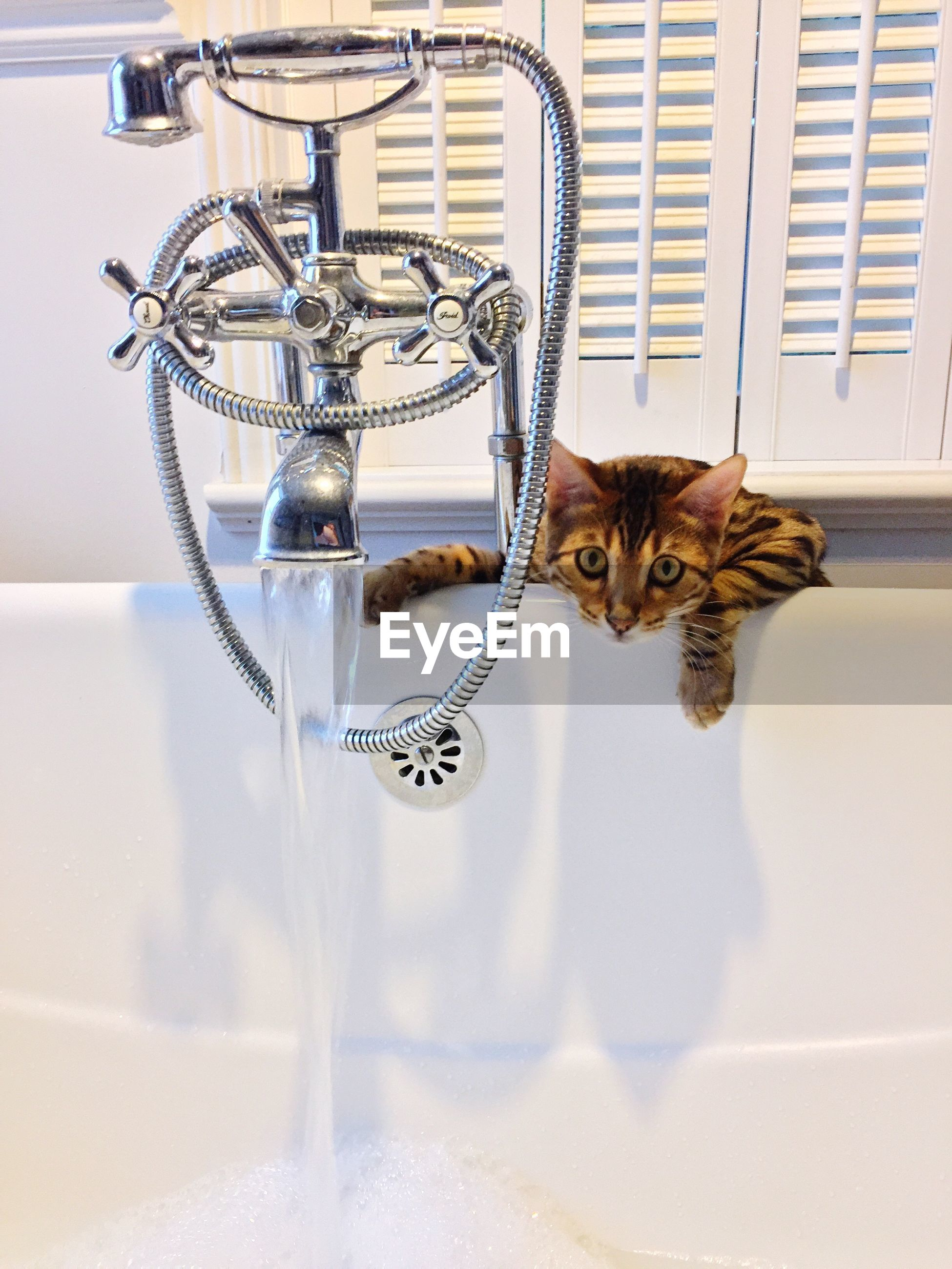 Cat behind faucet looking at camera