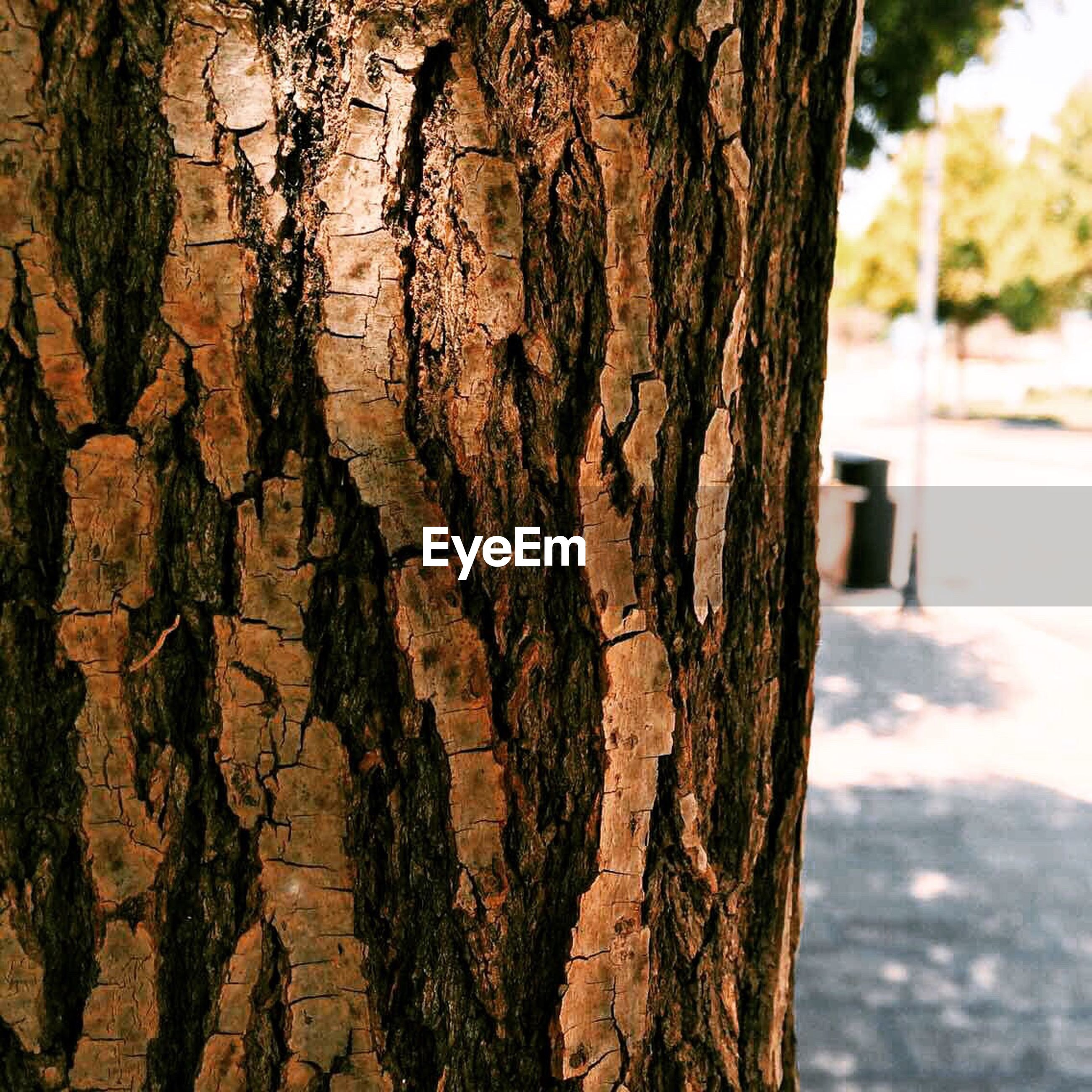 tree trunk, textured, tree, close-up, rough, bark, focus on foreground, wood - material, natural pattern, nature, pattern, day, growth, outdoors, plant bark, full frame, brown, no people, branch, backgrounds