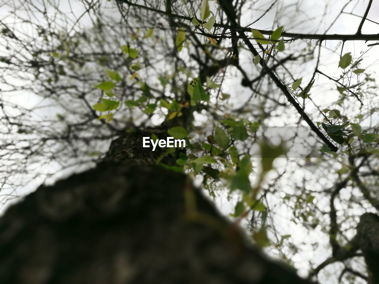 CLOSE-UP OF TREE AGAINST SKY