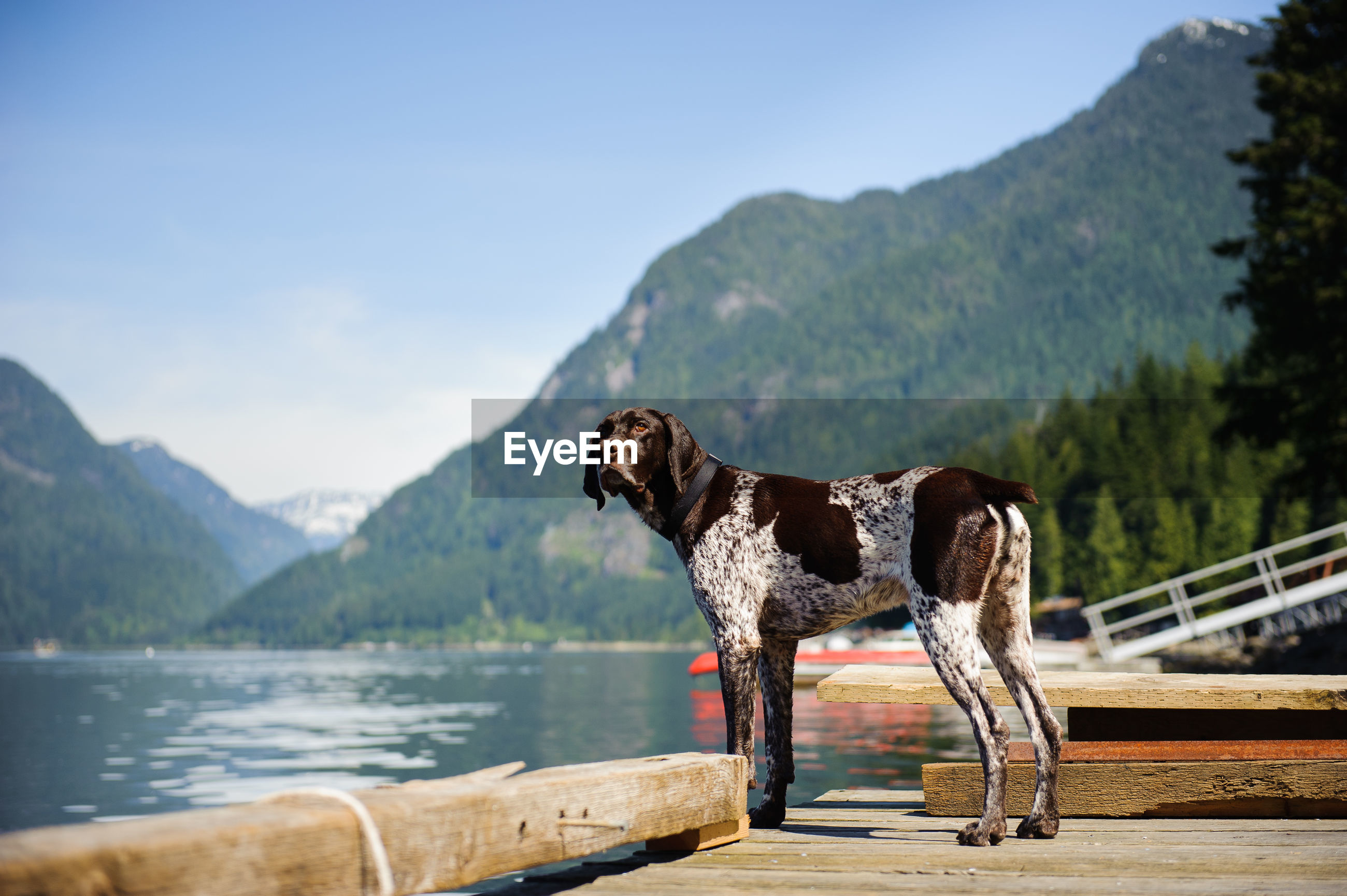 DOG STANDING BY LAKE AGAINST MOUNTAIN RANGE