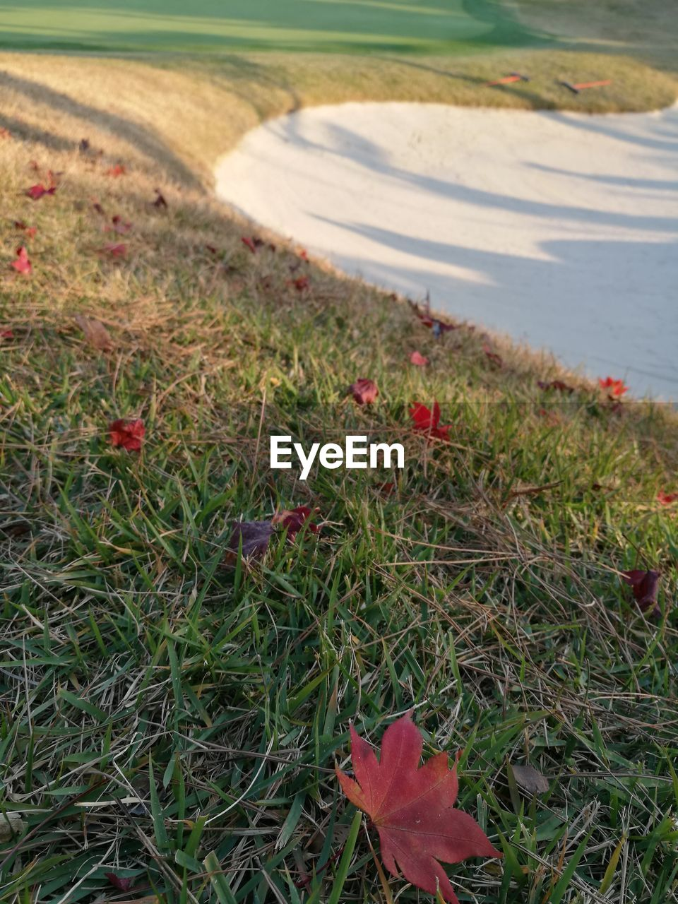 grass, nature, growth, field, red, day, high angle view, no people, outdoors, beauty in nature, green color, tranquility, plant, flower, water, landscape, scenics, close-up, freshness, flower head