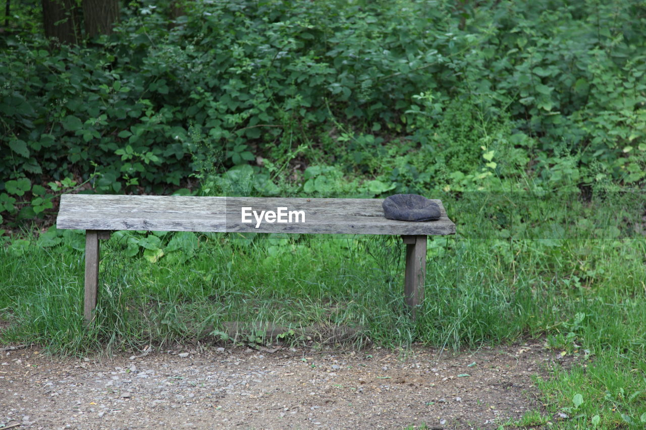 plant, bench, seat, green color, growth, day, land, nature, no people, wood - material, tree, grass, empty, outdoors, field, absence, park, relaxation, one animal, tranquility, park bench