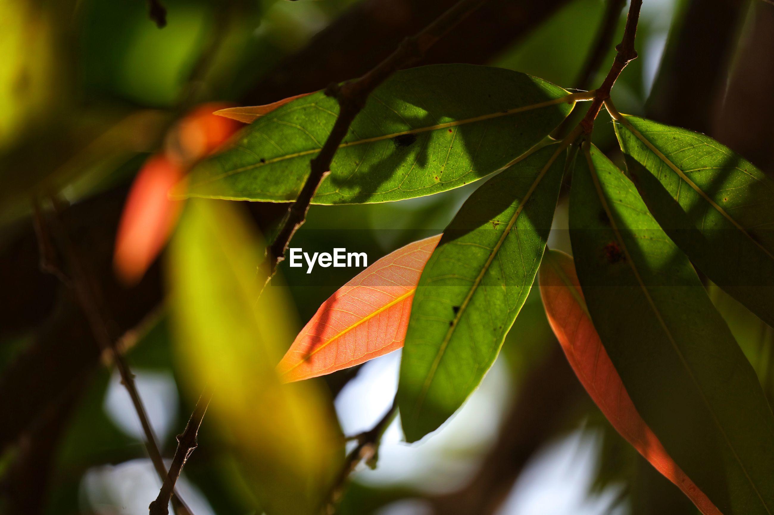 Close-up of orange leaves