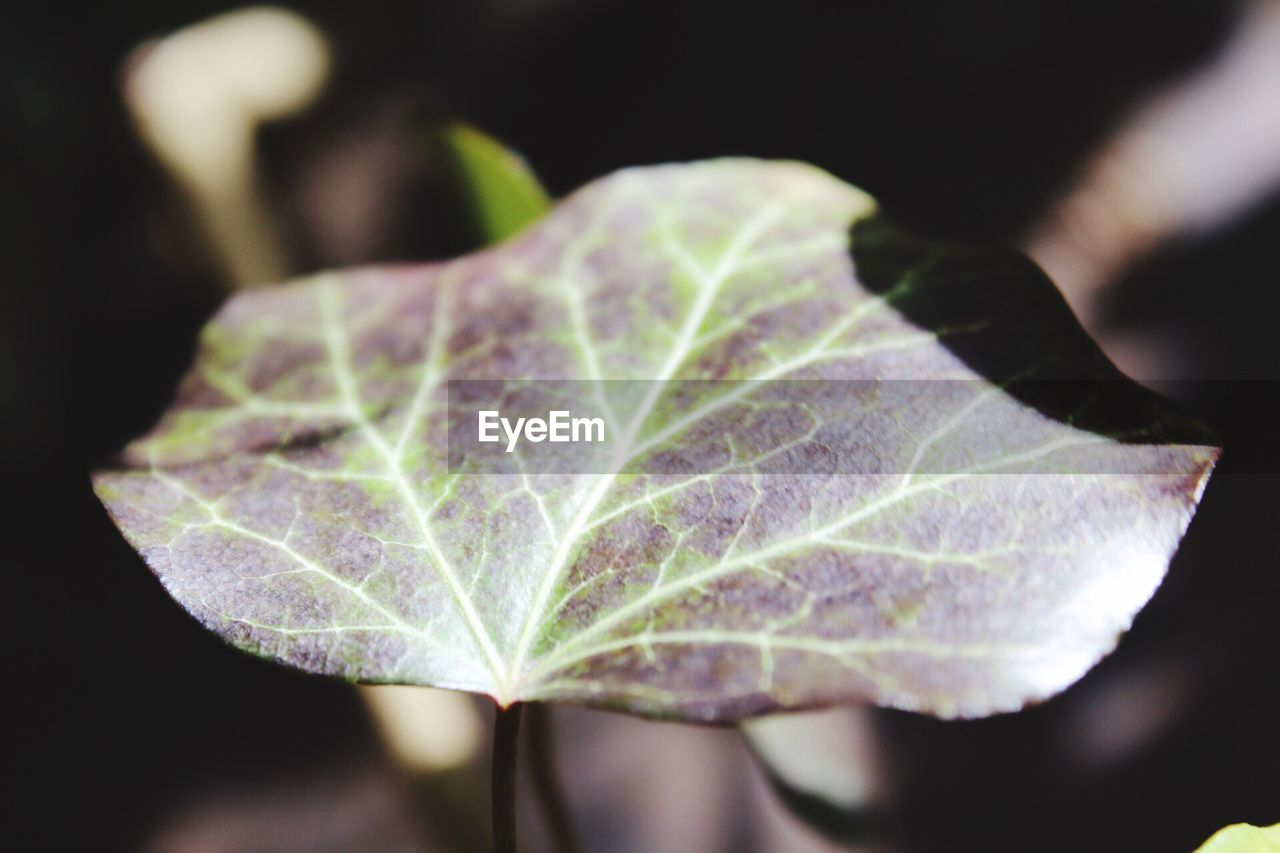 leaf, close-up, focus on foreground, fragility, day, nature, no people, green color, plant, outdoors, growth, beauty in nature, freshness