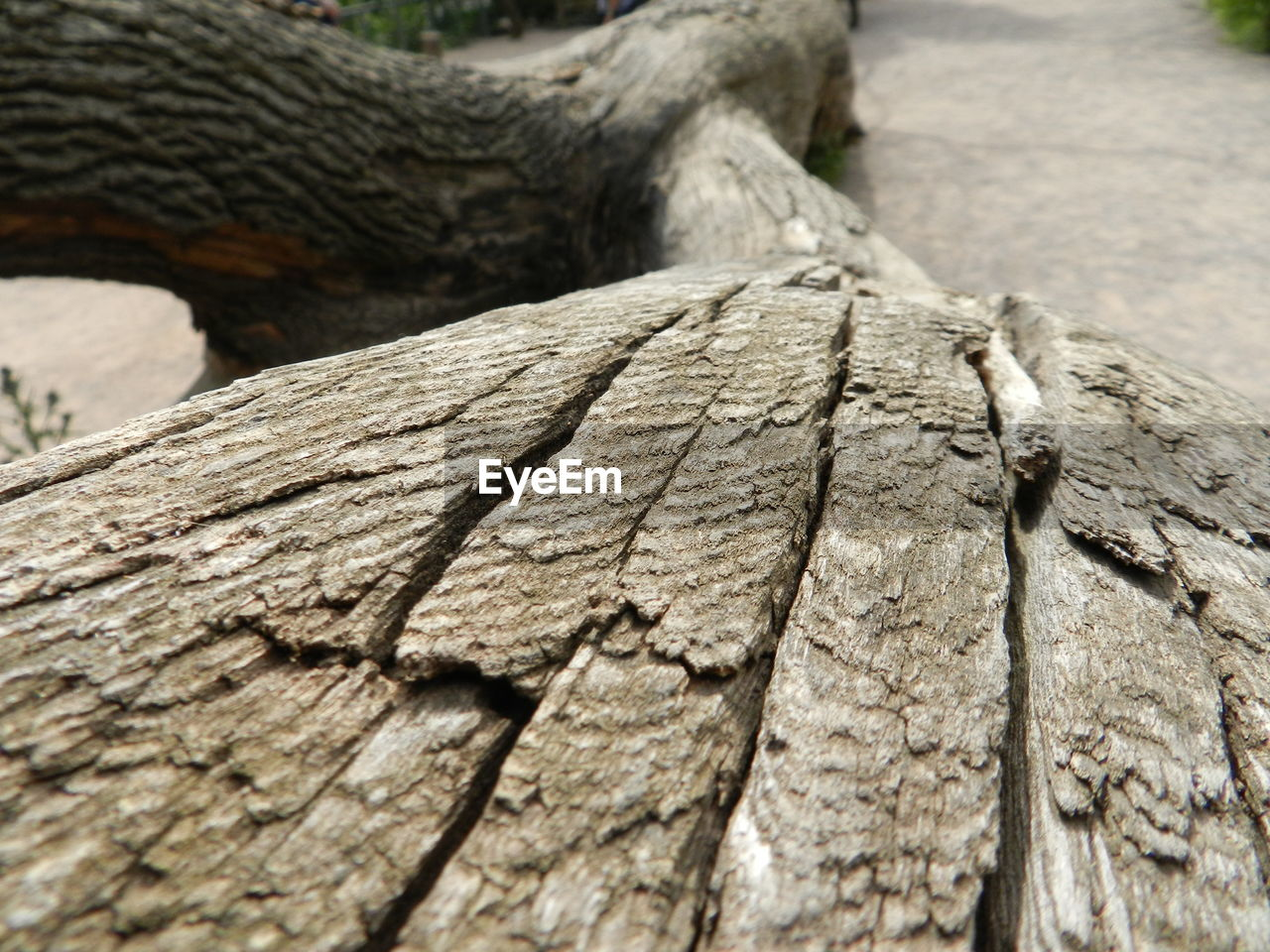 wood - material, textured, tree trunk, day, log, rough, cracked, one animal, no people, outdoors, tree, close-up, nature, animal themes