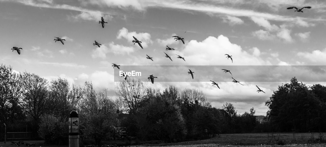 cloud - sky, sky, bird, vertebrate, animal themes, flying, tree, animals in the wild, animal, animal wildlife, group of animals, plant, nature, day, large group of animals, no people, flock of birds, mid-air, beauty in nature, outdoors
