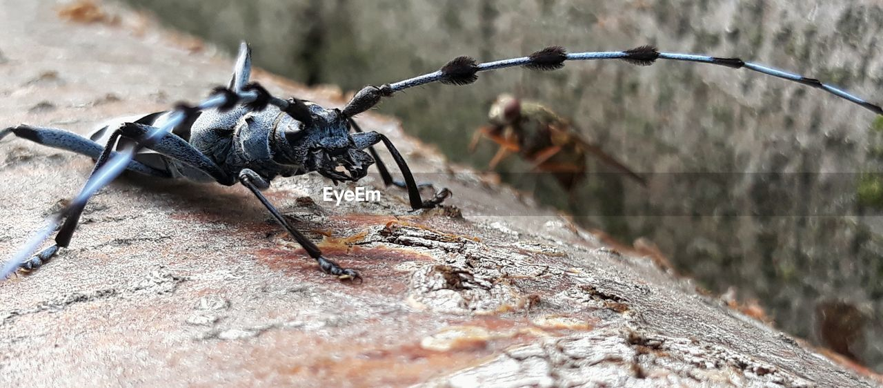 animal, animals in the wild, animal themes, animal wildlife, selective focus, close-up, insect, nature, invertebrate, no people, day, group of animals, focus on foreground, wood - material, outdoors, solid, rock, fence, rock - object