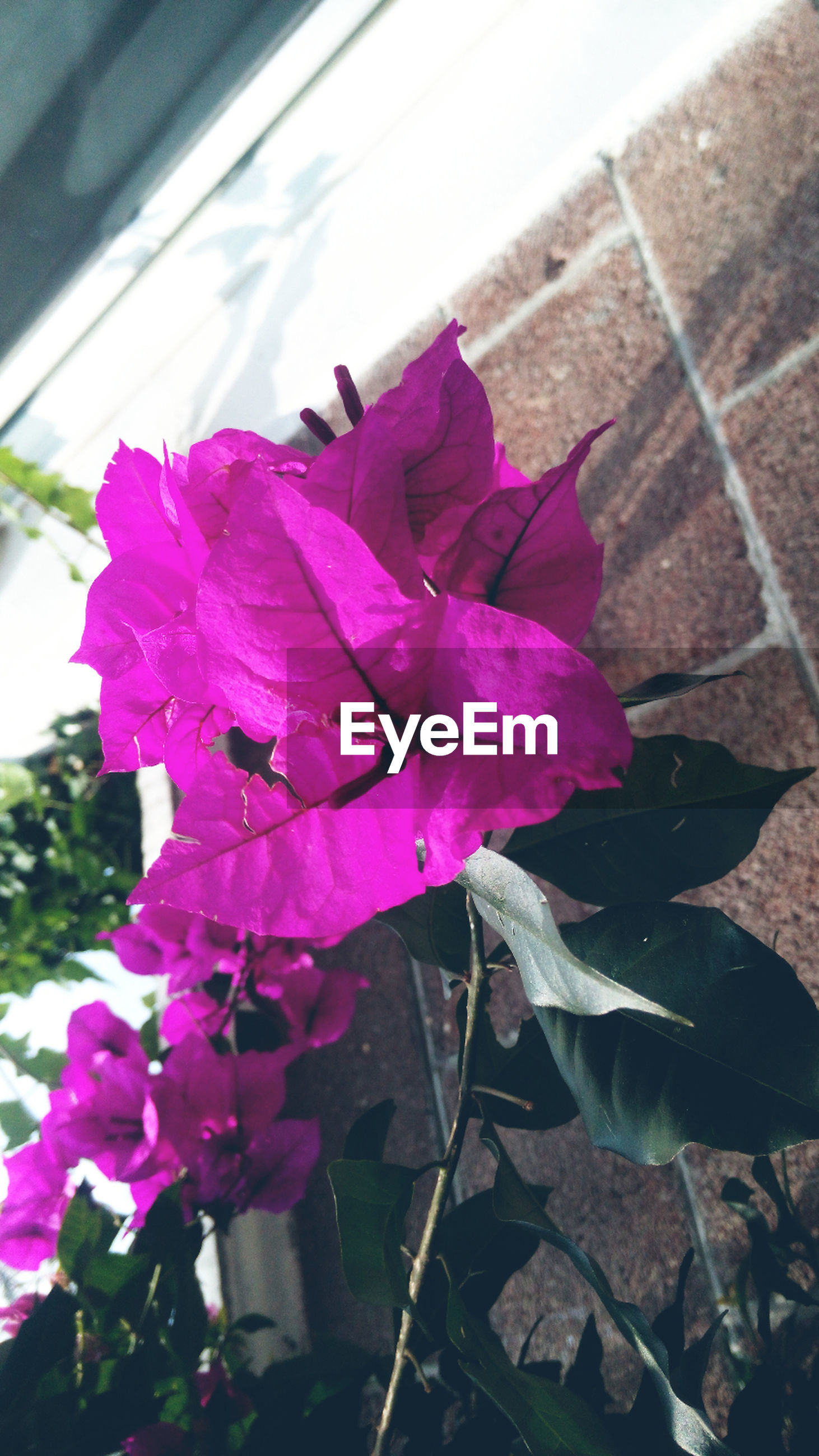 flower, petal, fragility, leaf, freshness, flower head, plant, growth, pink color, blooming, nature, close-up, beauty in nature, day, built structure, outdoors, sunlight, architecture, single flower, building exterior
