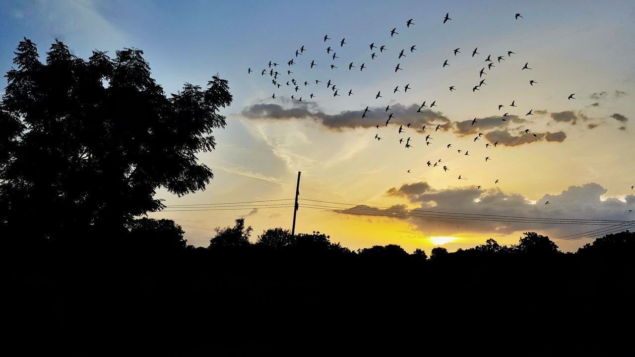 silhouette, sky, sunset, plant, tree, beauty in nature, cloud - sky, scenics - nature, animal themes, tranquil scene, bird, group of animals, nature, vertebrate, tranquility, animal, large group of animals, no people, orange color, animals in the wild, flock of birds, outdoors