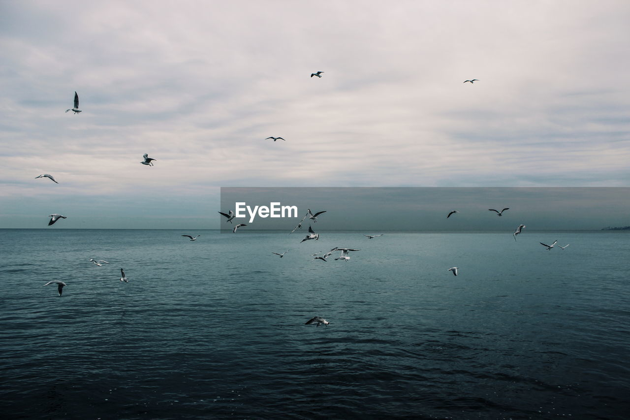 animal wildlife, animals in the wild, group of animals, bird, animal themes, animal, vertebrate, water, large group of animals, sky, sea, waterfront, flying, beauty in nature, cloud - sky, nature, mid-air, no people, scenics - nature, flock of birds, horizon over water, seagull