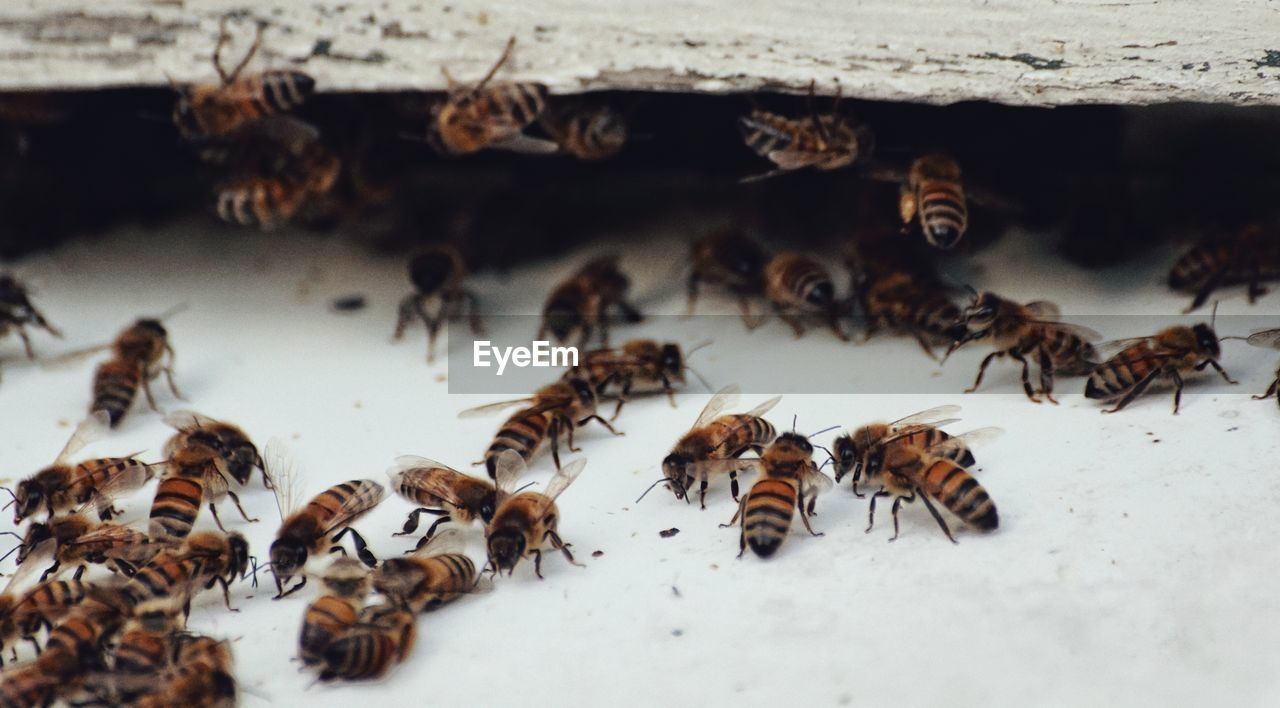 High Angle View Of Bees On Snow Covered Field