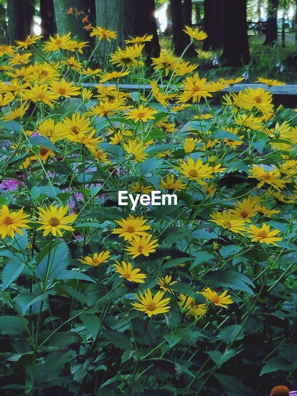 flower, growth, yellow, nature, plant, beauty in nature, fragility, freshness, outdoors, petal, day, no people, leaf, blooming, close-up, flower head