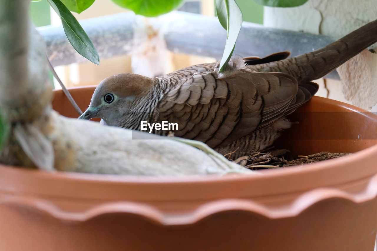 bird, animal themes, animal, vertebrate, no people, close-up, animal wildlife, one animal, animals in the wild, selective focus, indoors, food, day, animal nest, container, young animal, young bird, food and drink