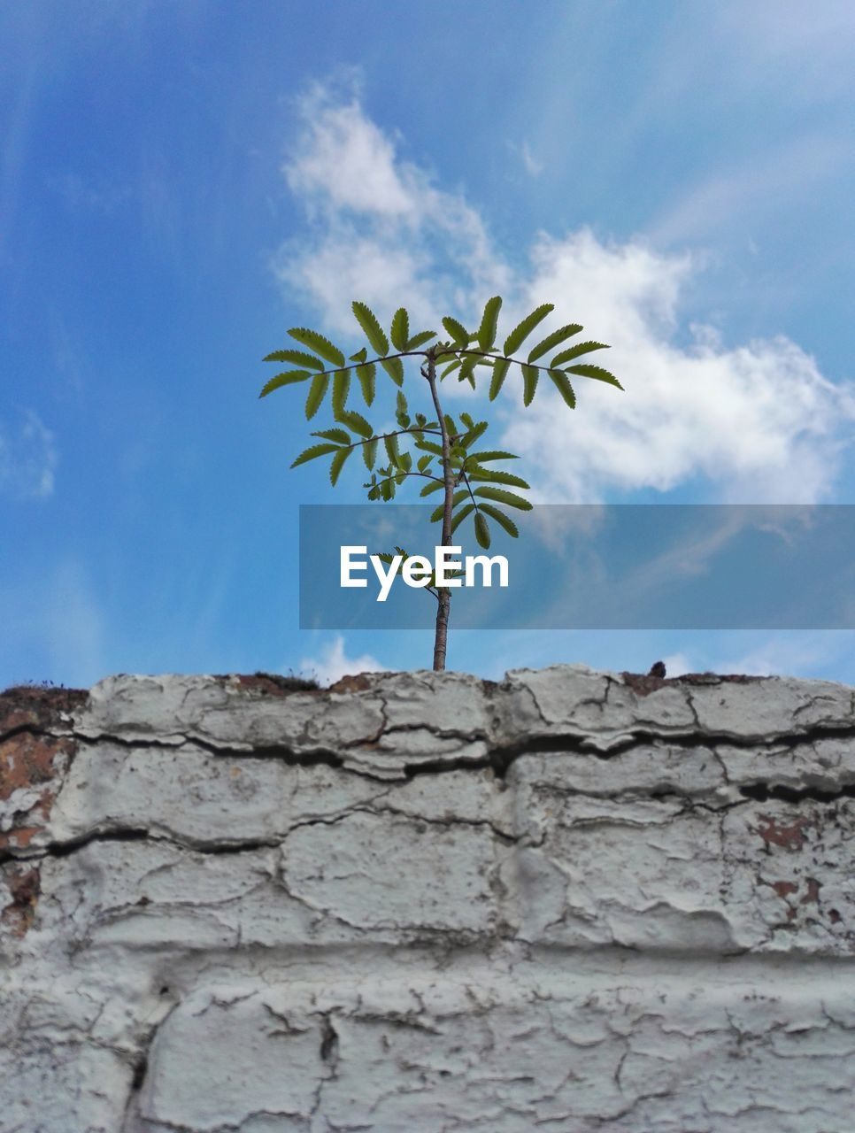 wall, plant, wall - building feature, nature, cloud - sky, growth, architecture, built structure, low angle view, sky, stone wall, no people, day, beauty in nature, outdoors, leaf, freshness, plant part, close-up, solid, brick, concrete