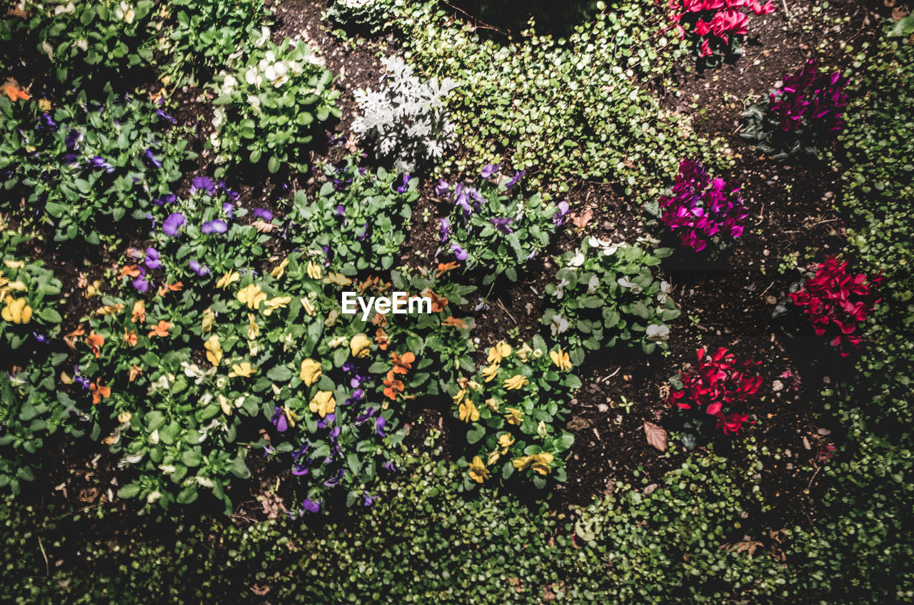 flower, growth, no people, purple, plant, freshness, high angle view, outdoors, day, nature, fragility, beauty in nature, multi colored, leaf, flower head, close-up