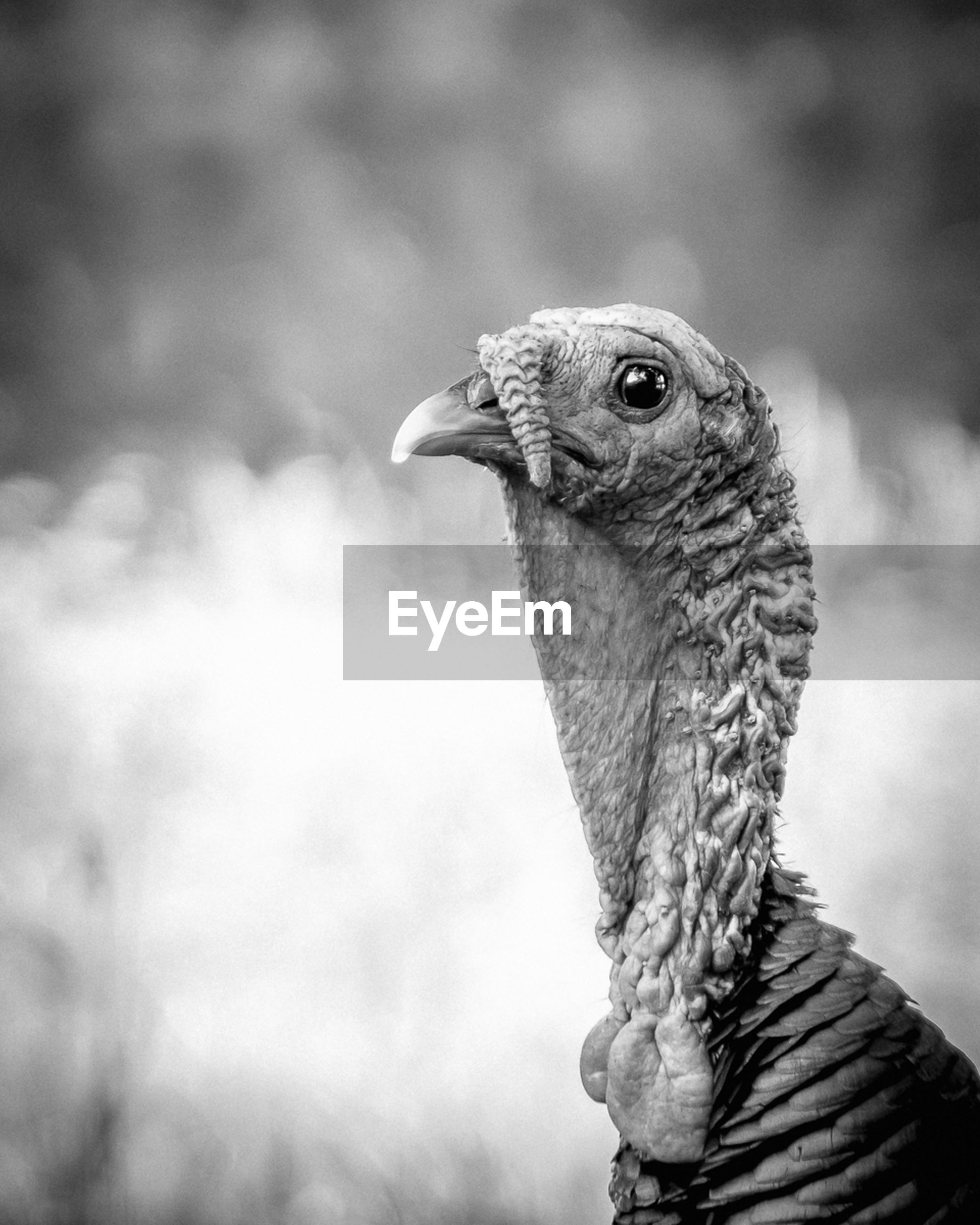 one animal, animal themes, animals in the wild, wildlife, bird, focus on foreground, close-up, animal head, beak, looking away, side view, bird of prey, nature, outdoors, day, animal body part, owl, no people, zoology, reptile