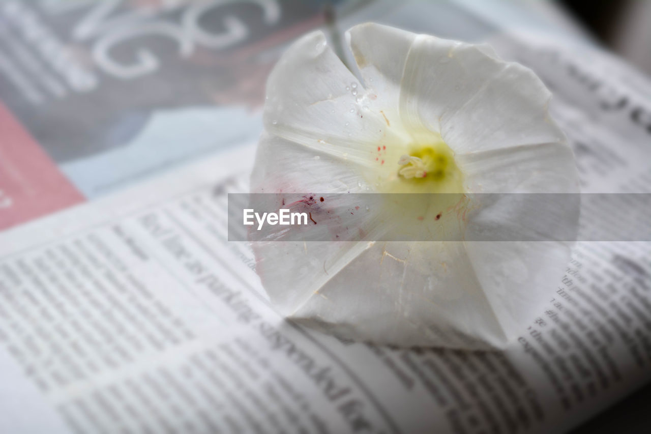 Close-up of white flower on newspaper