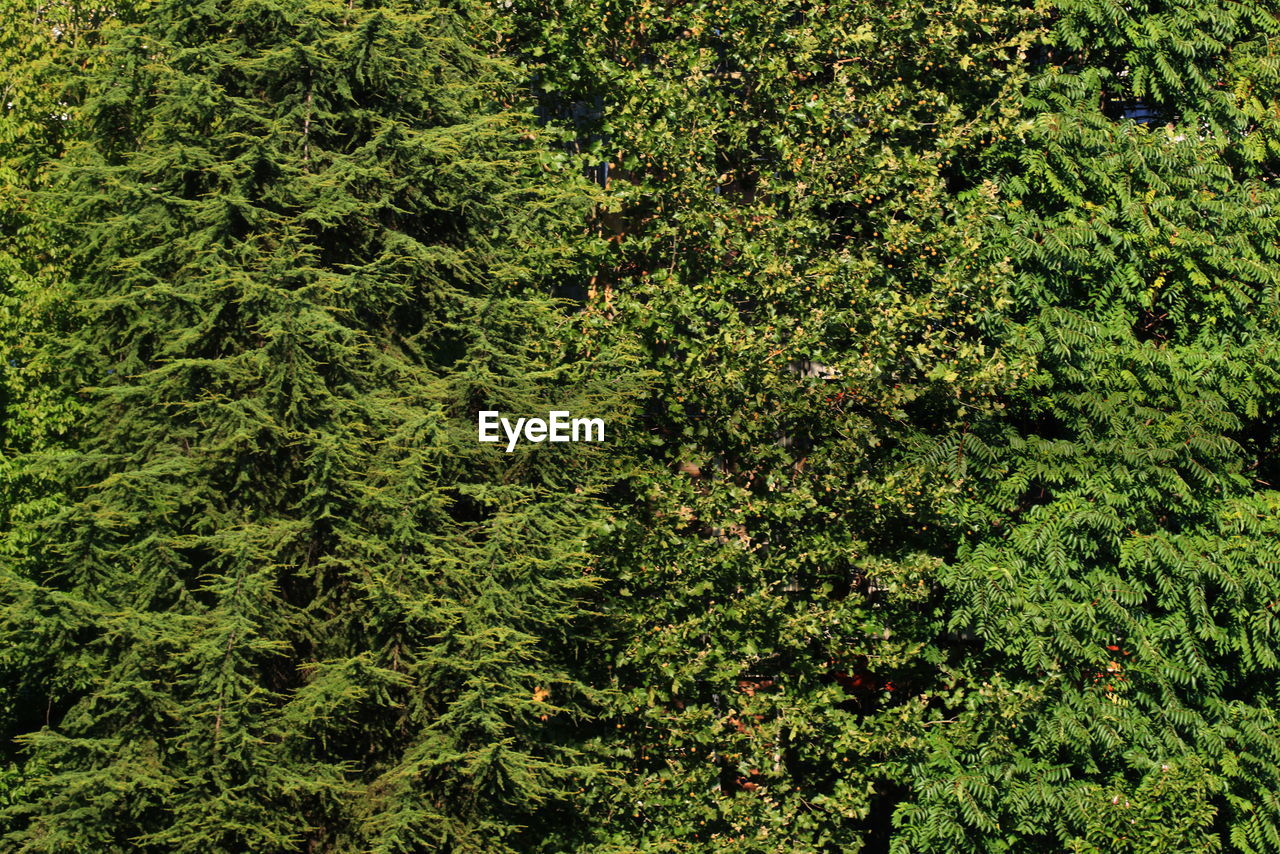 green, nature, lush foliage, growth, backgrounds, forest, foliage, day, no people, outdoors