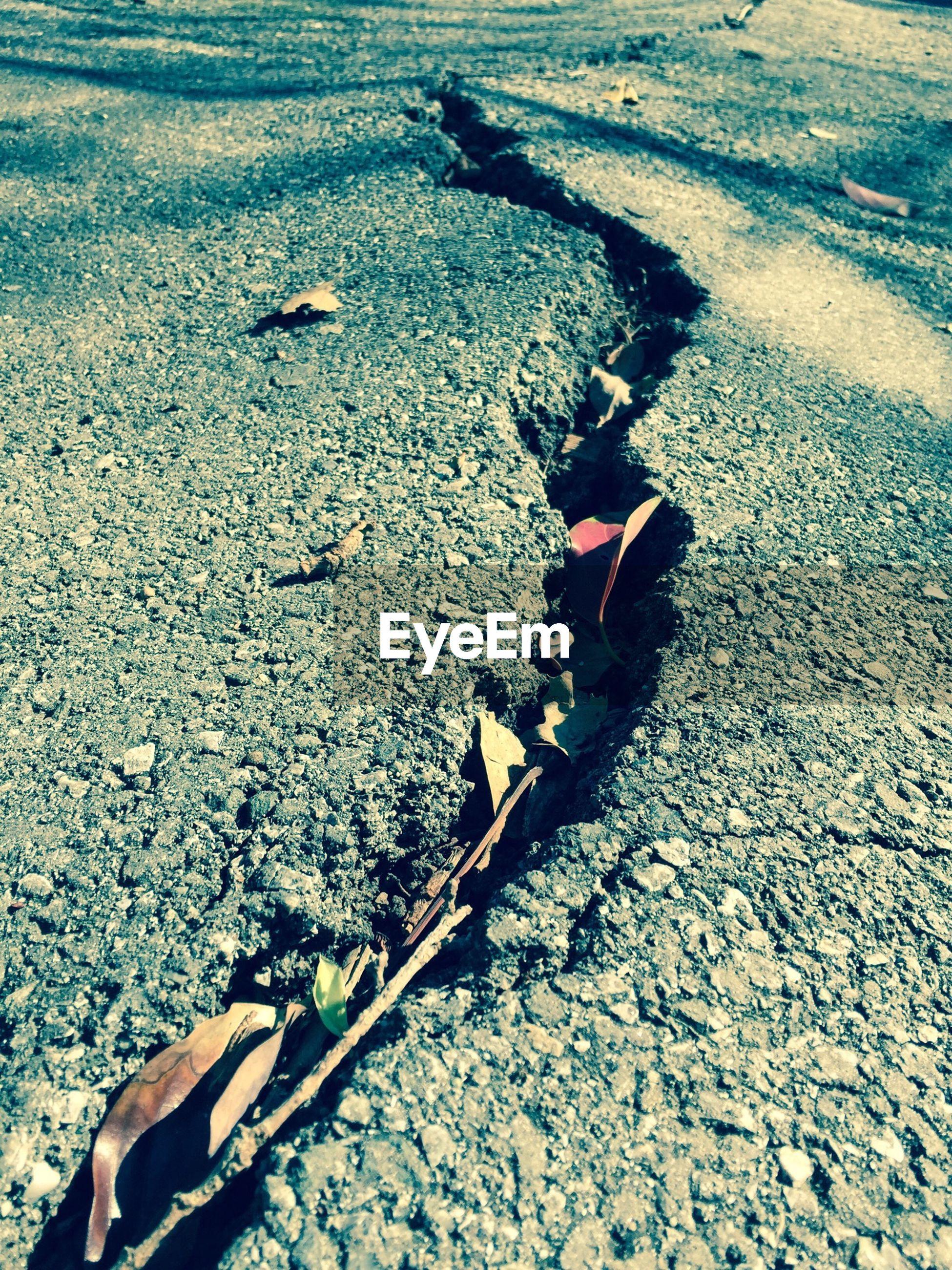 Detail shot of cracked ground