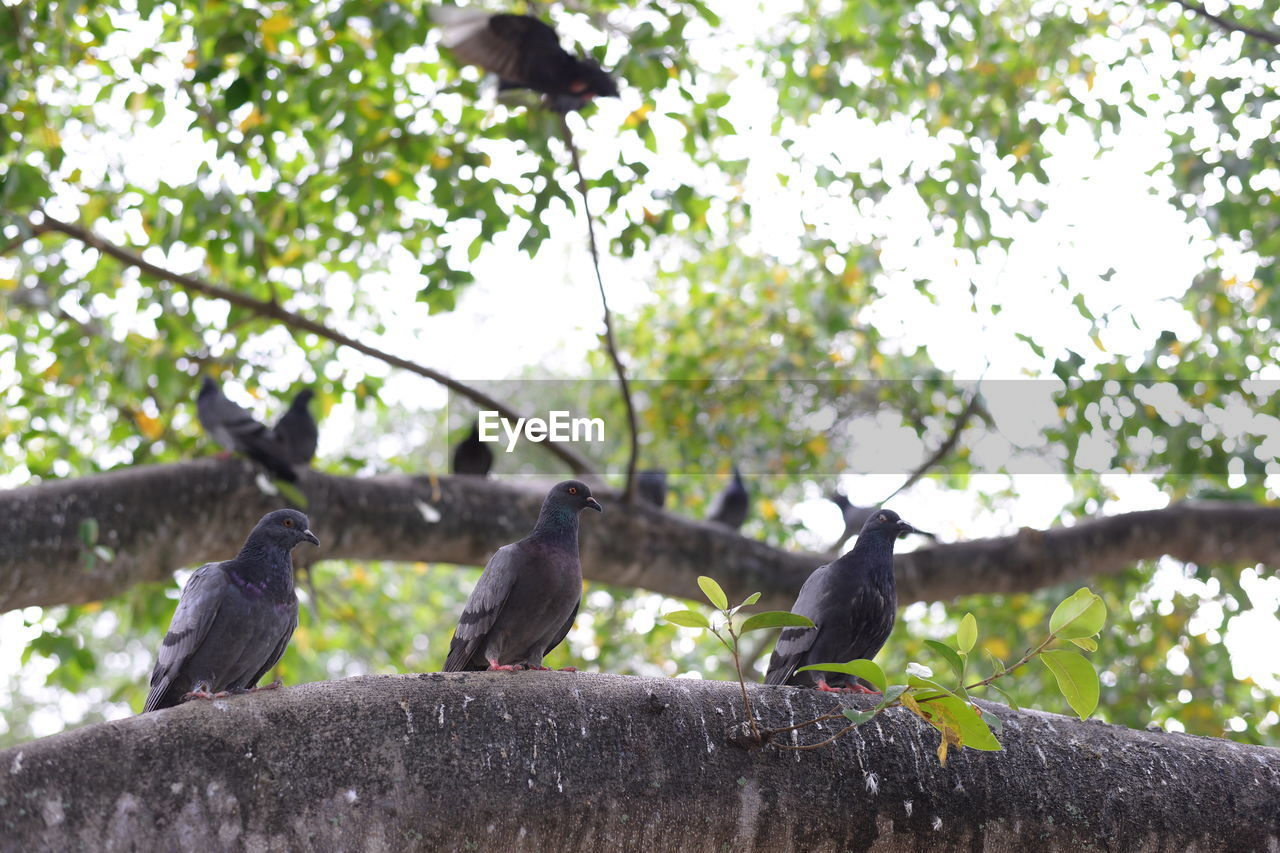 animal themes, animals in the wild, bird, tree, low angle view, animal wildlife, perching, day, outdoors, no people, nature, focus on foreground, branch, sky, close-up