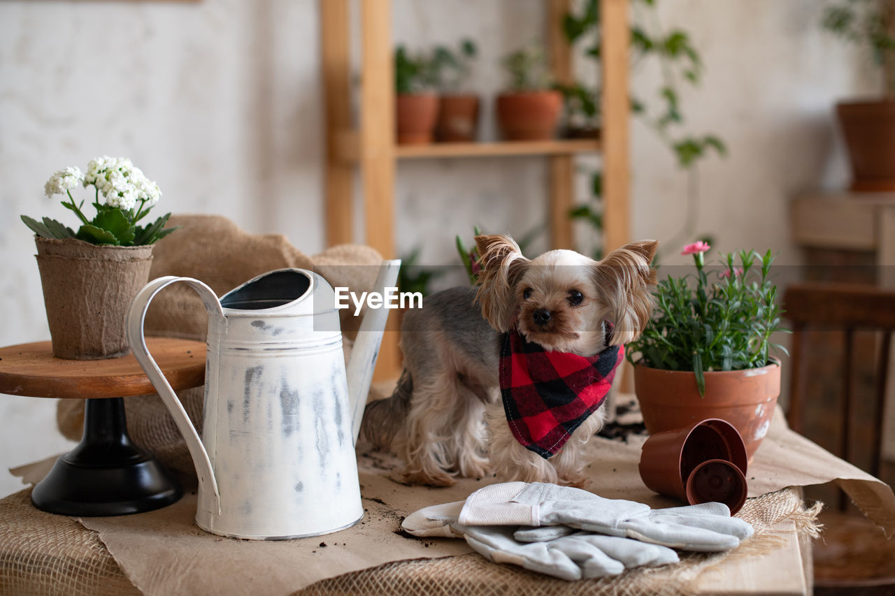 PORTRAIT OF A DOG ON TABLE