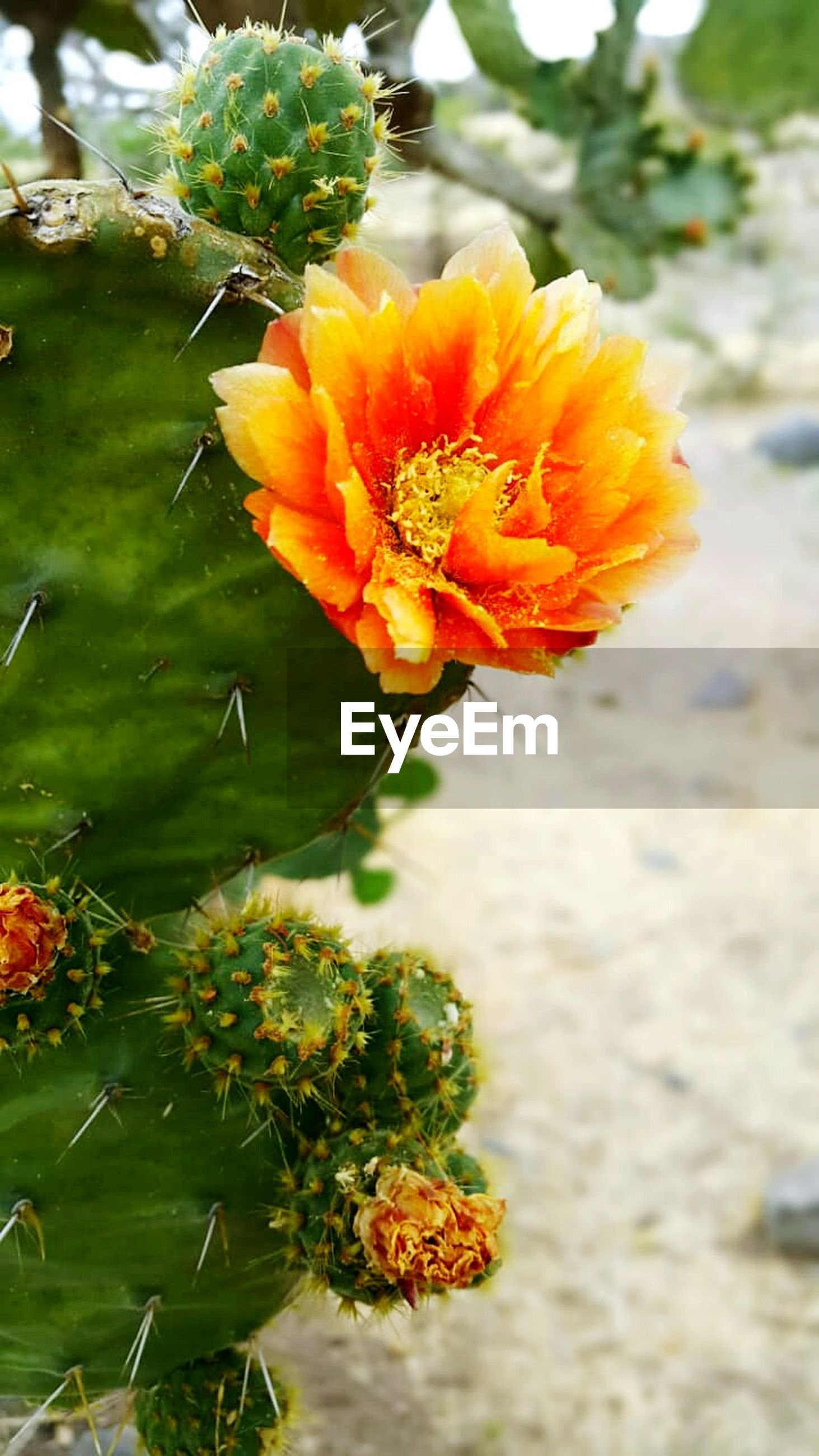 flowering plant, flower, plant, vulnerability, fragility, growth, beauty in nature, freshness, petal, inflorescence, nature, flower head, close-up, focus on foreground, day, no people, yellow, water, outdoors, green color, lantana