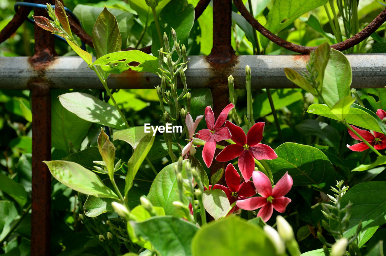 plant, plant part, leaf, flower, flowering plant, growth, beauty in nature, green color, freshness, petal, fragility, vulnerability, close-up, inflorescence, flower head, nature, day, pink color, no people, outdoors