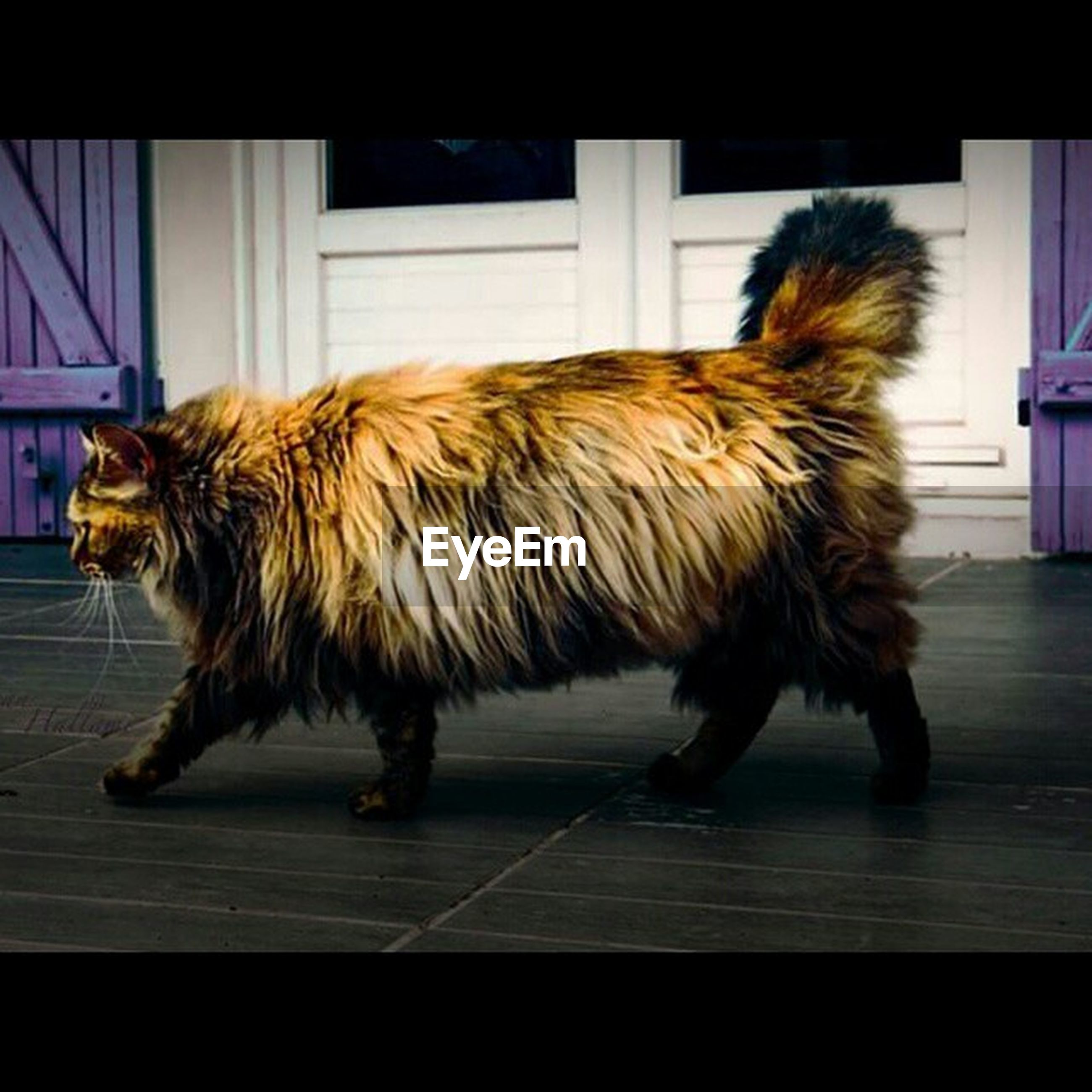 animal themes, domestic animals, one animal, mammal, pets, dog, full length, animal hair, indoors, side view, brown, zoology, vertebrate, animal, two animals, built structure, no people, day, standing, livestock