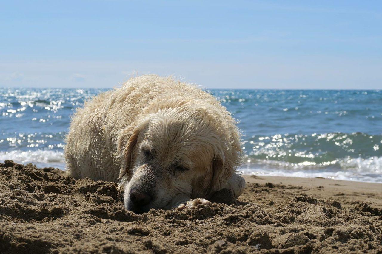 sea, water, one animal, beach, mammal, animal, land, animal themes, pets, domestic, domestic animals, canine, dog, sky, horizon over water, sand, horizon, vertebrate, nature, no people