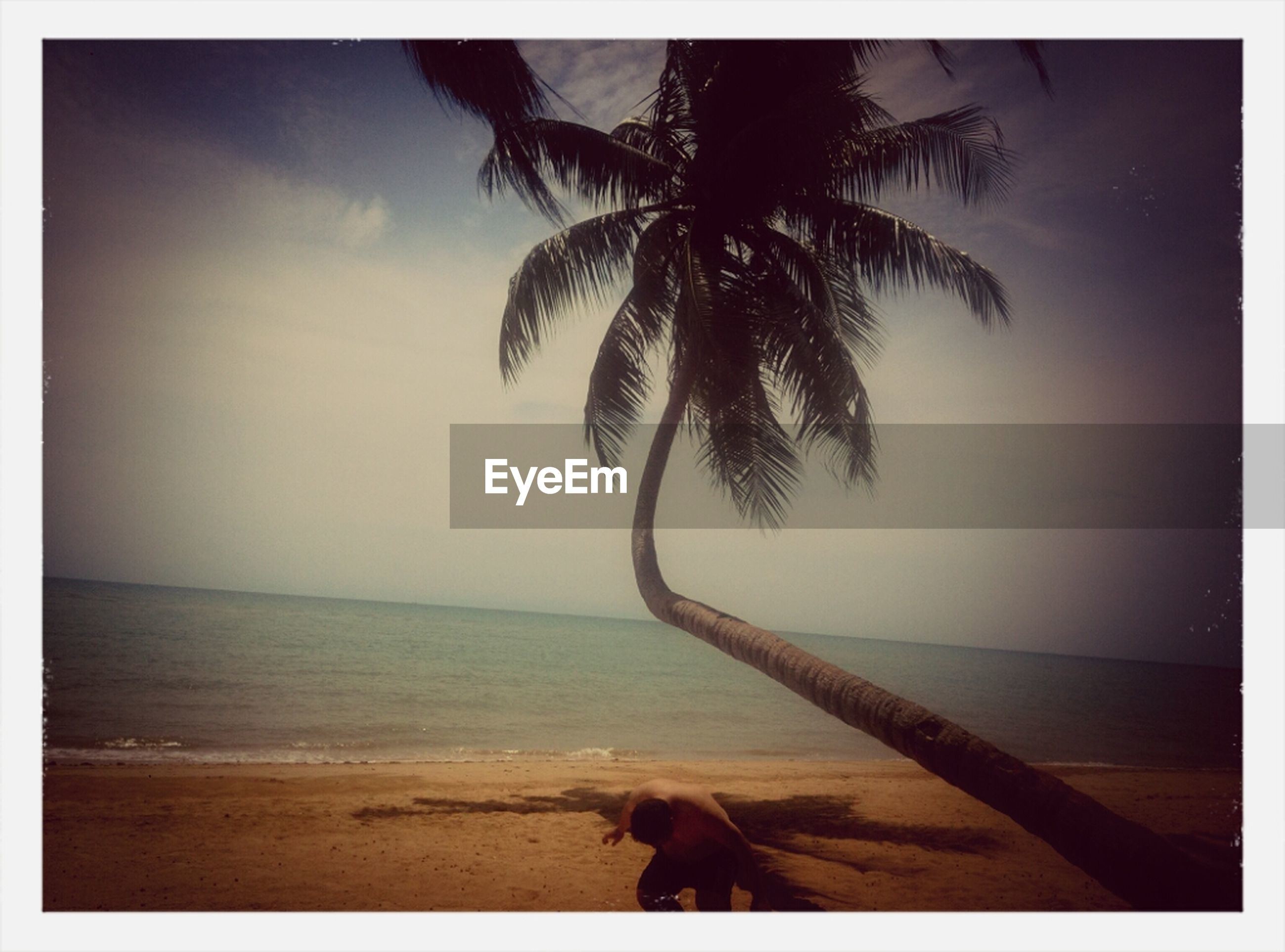 sea, horizon over water, beach, palm tree, water, shore, sky, tranquility, tranquil scene, scenics, tree, sand, beauty in nature, transfer print, nature, auto post production filter, idyllic, coastline, tree trunk, outdoors