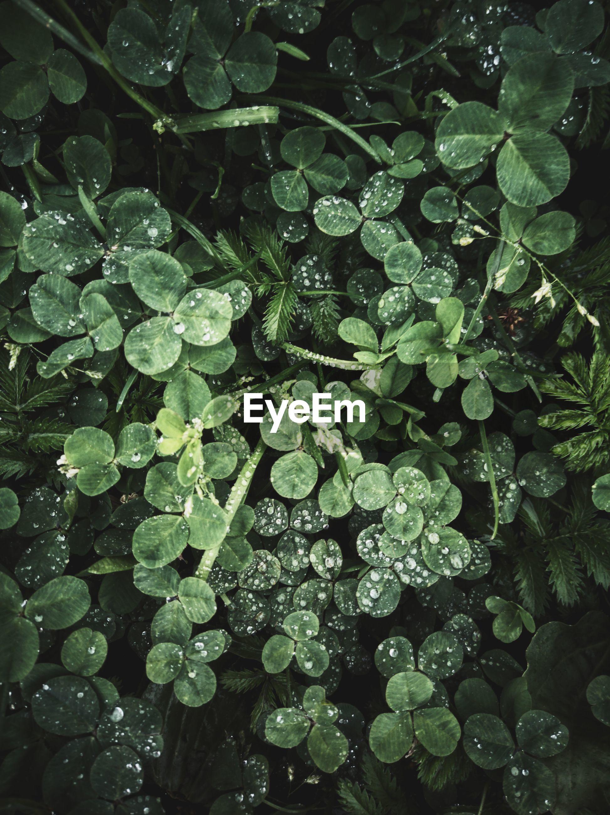 Full frame shot of wet plant