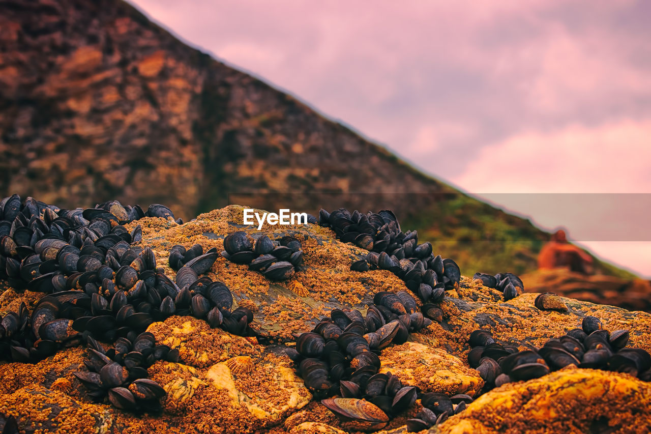 Close-Up Of Mussels On Rock Formation Against Sky