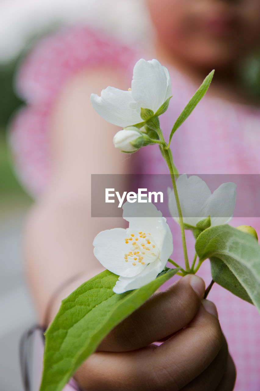 flowering plant, flower, plant, leaf, freshness, plant part, holding, close-up, vulnerability, human hand, fragility, beauty in nature, focus on foreground, hand, nature, one person, petal, flower head, inflorescence, growth, outdoors, finger, small, human limb
